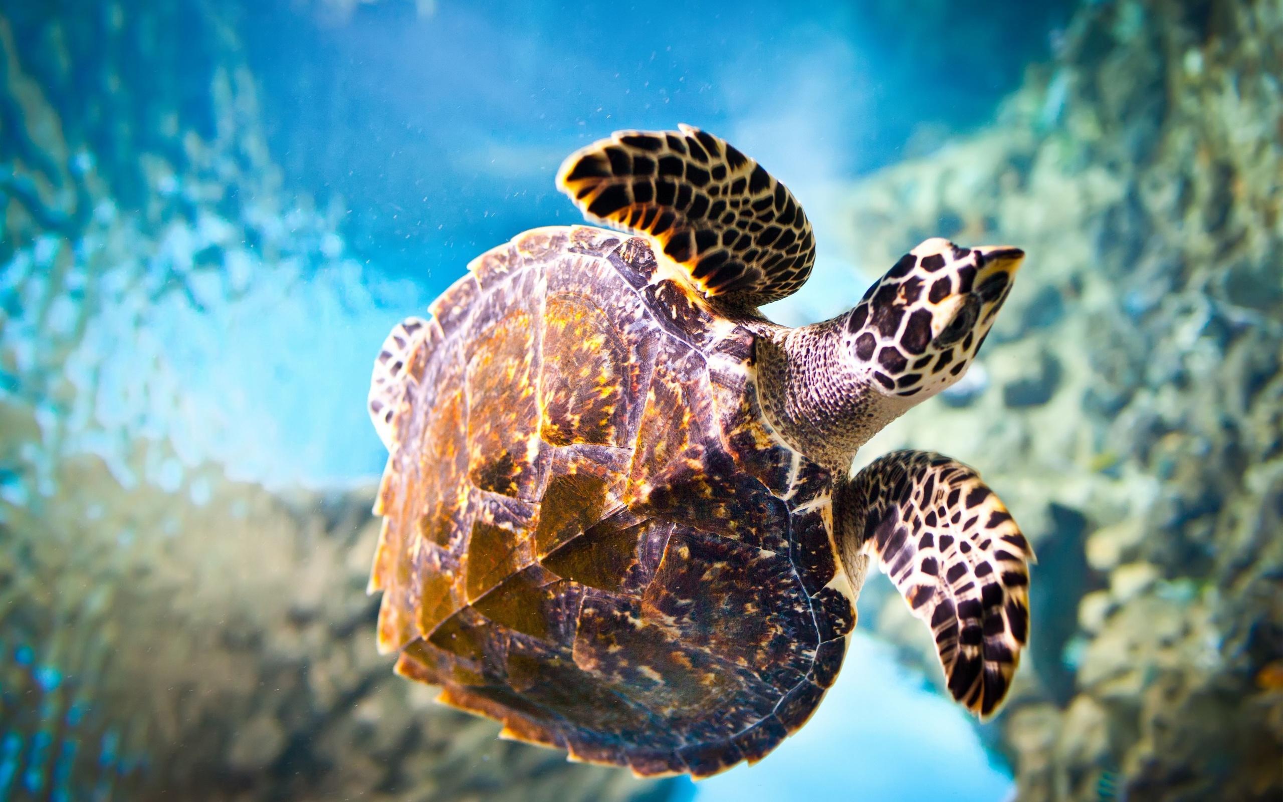 растения интерьере самые красивые фоновые картинки подводных животных виды, делающие кладки