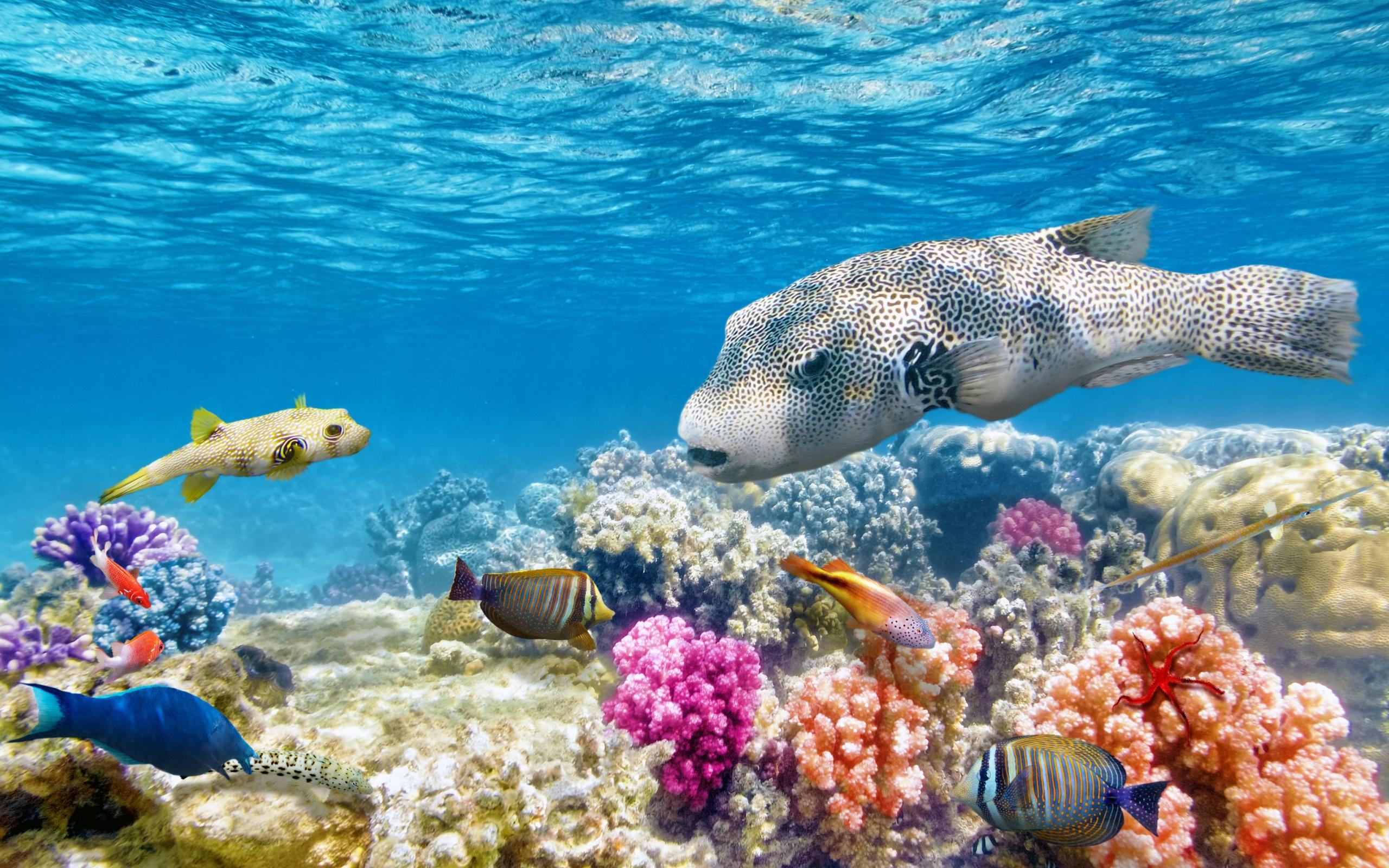 детонации картинки океан и его обитатели краснодар