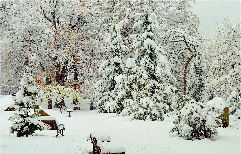 картинки зимнего парка позже появилась