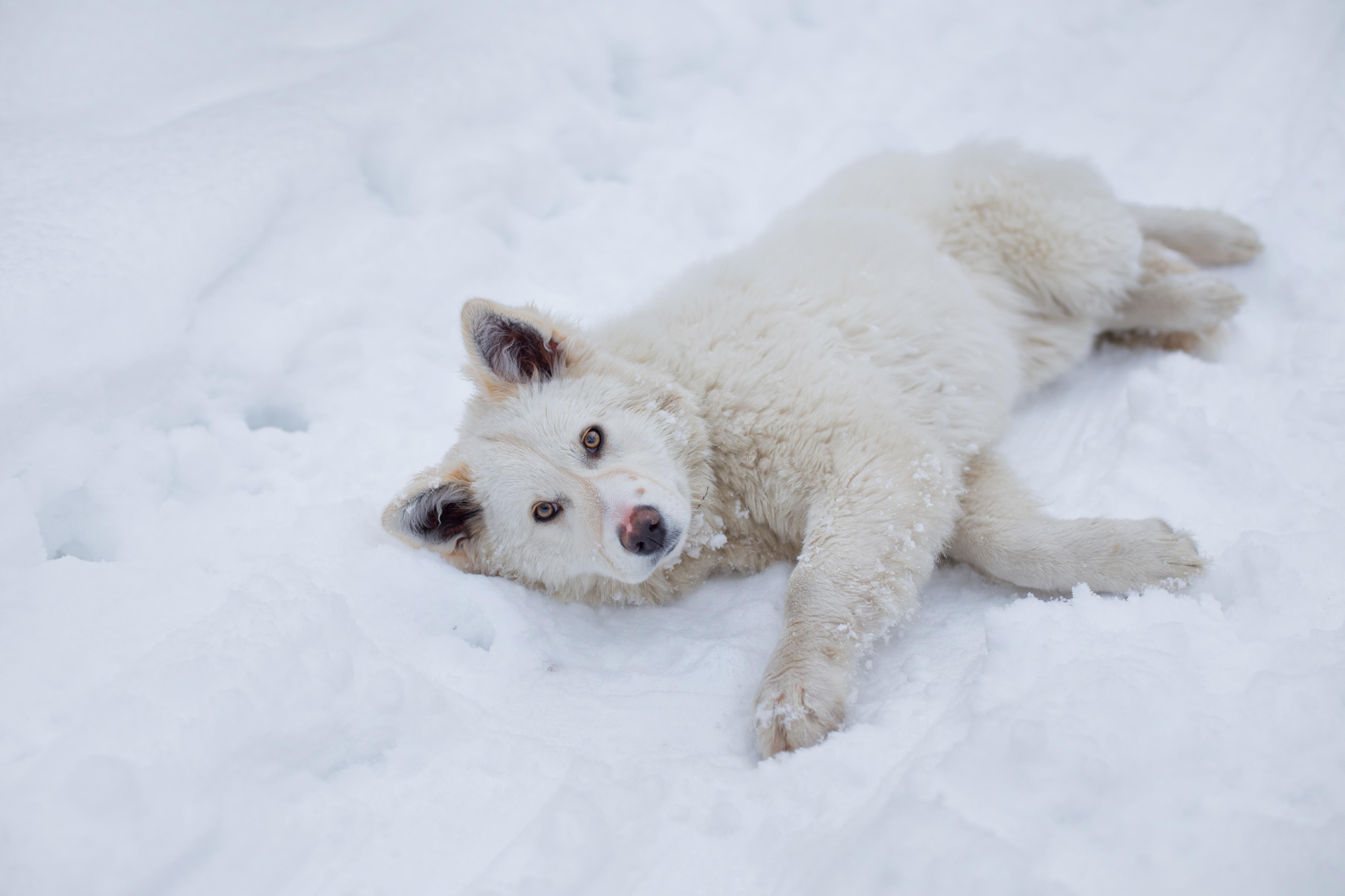 щенок снег puppy snow  № 2001734  скачать