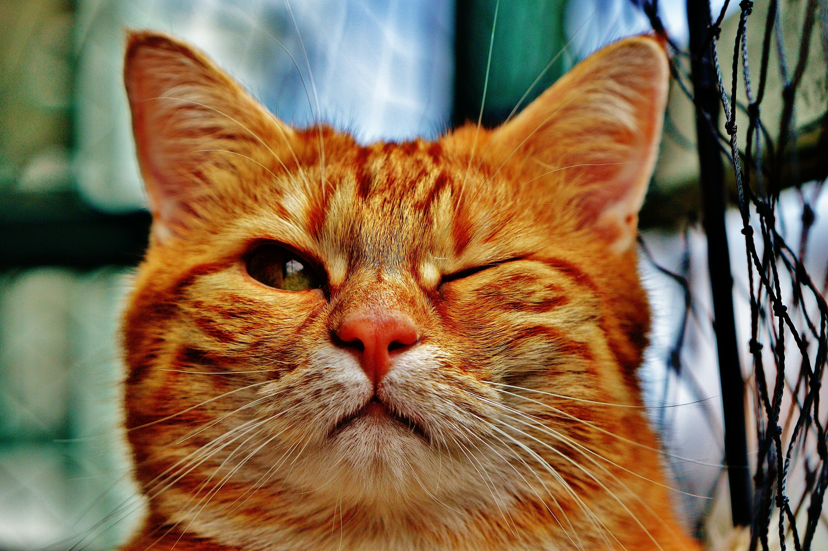 Прикольные картинки рыжий кот