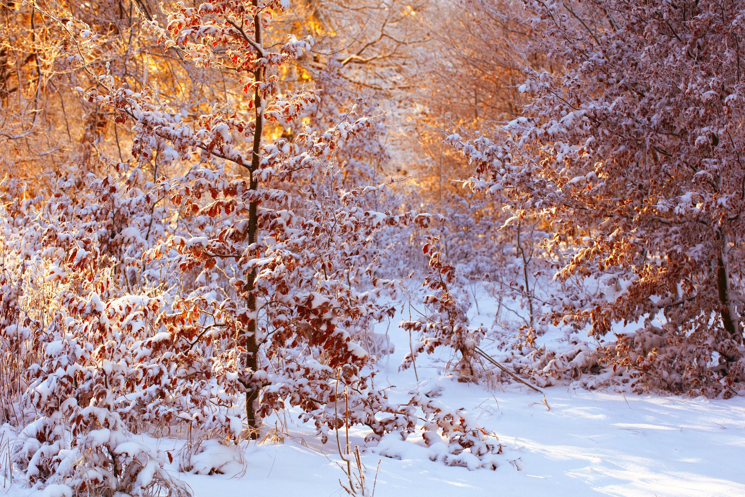 снег деревья желтые  № 442293 бесплатно