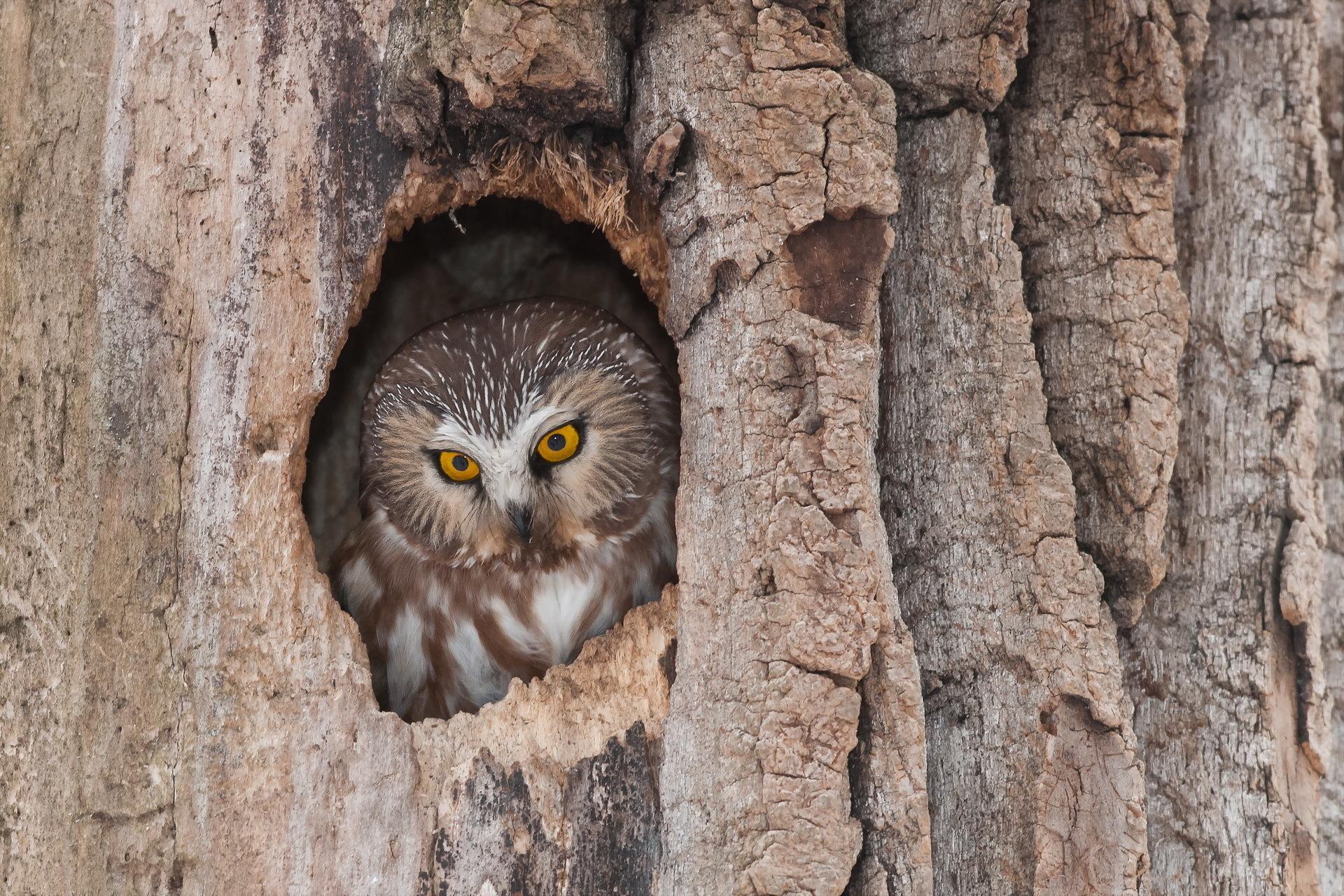 ленинской гнезда в дуплах деревьев фото основном