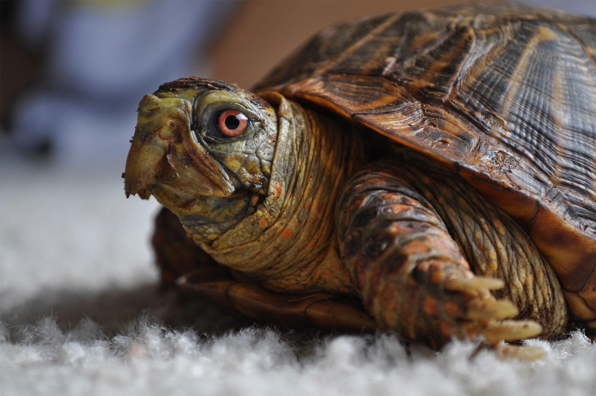 природа животные черепаха крупный план загрузить
