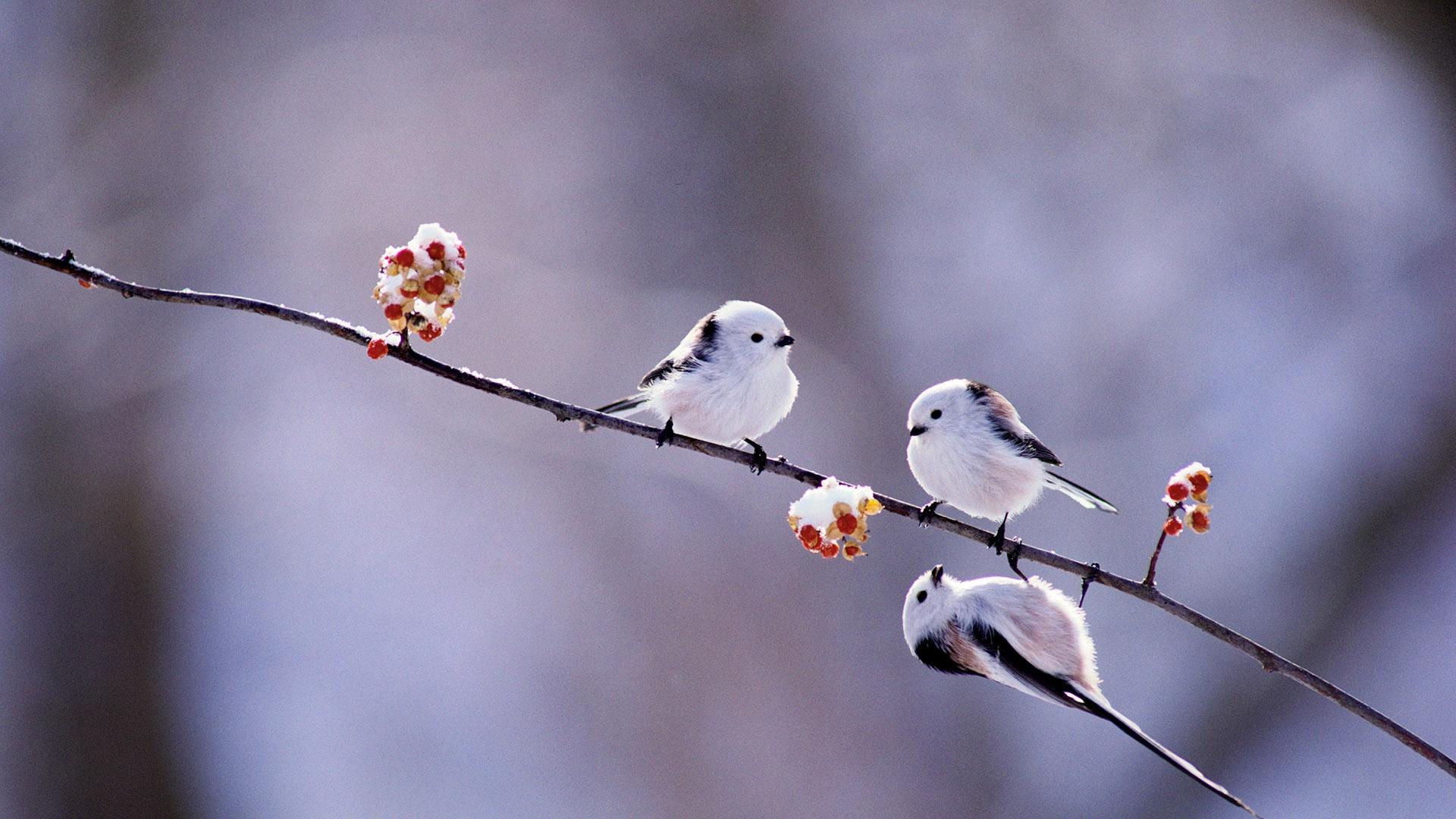 птичка на снегу скачать