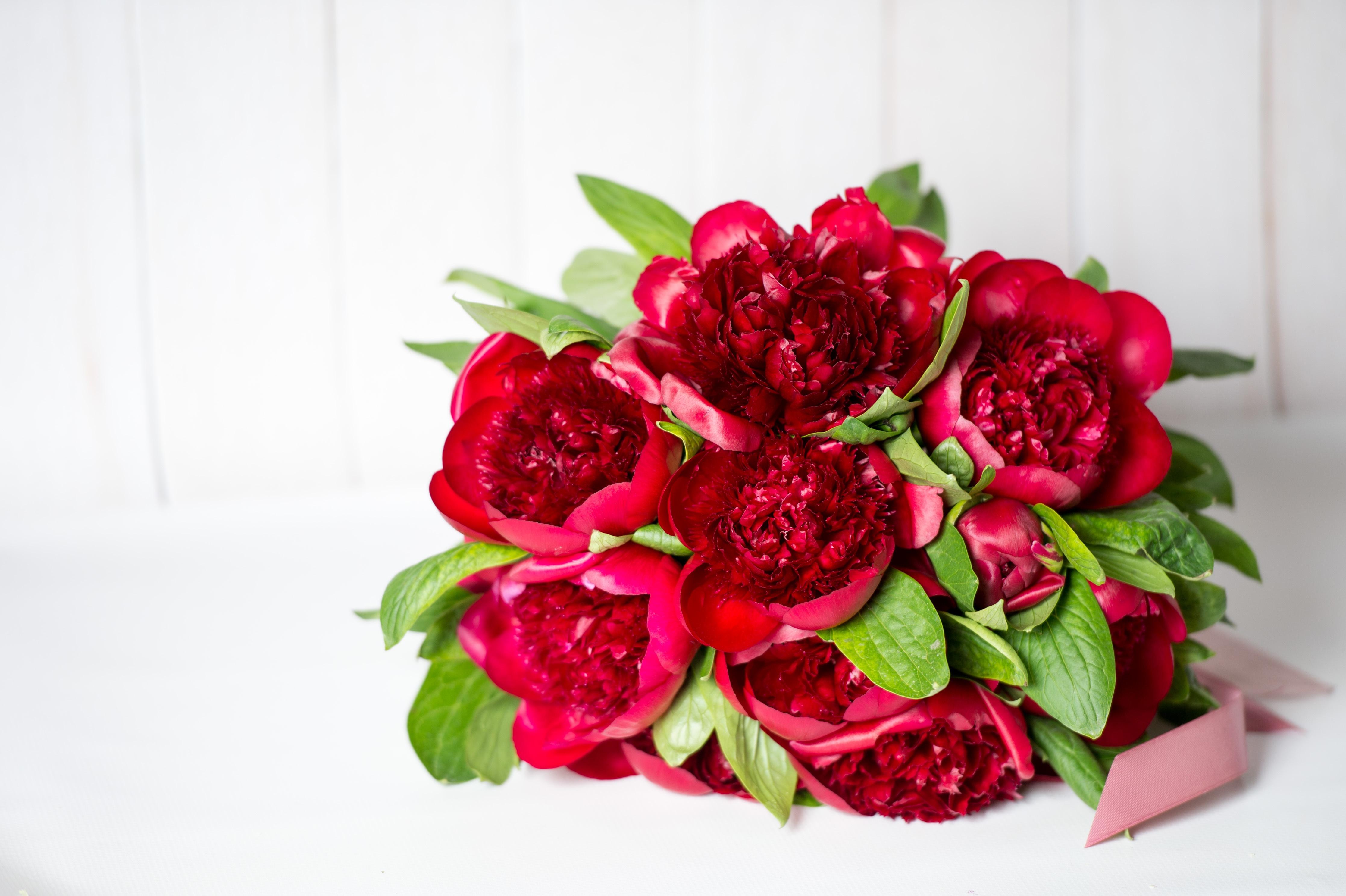 цветы пионы бордовые фото помноженная