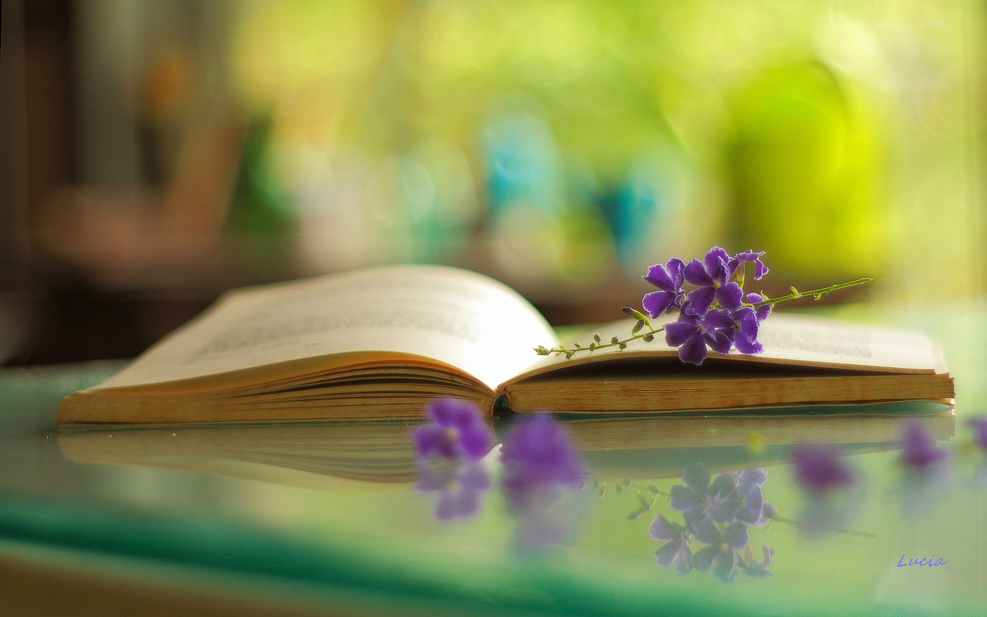 Цветок в книге  № 1489017 загрузить