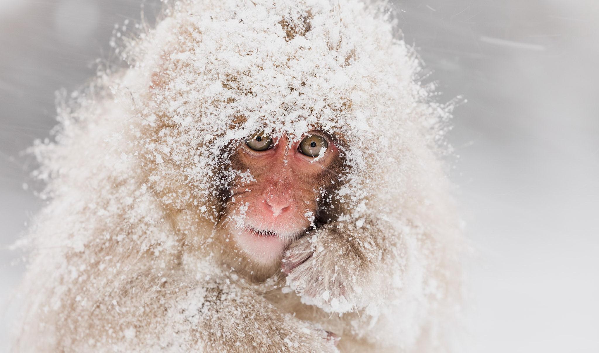 Картинка снег на голову, васильев
