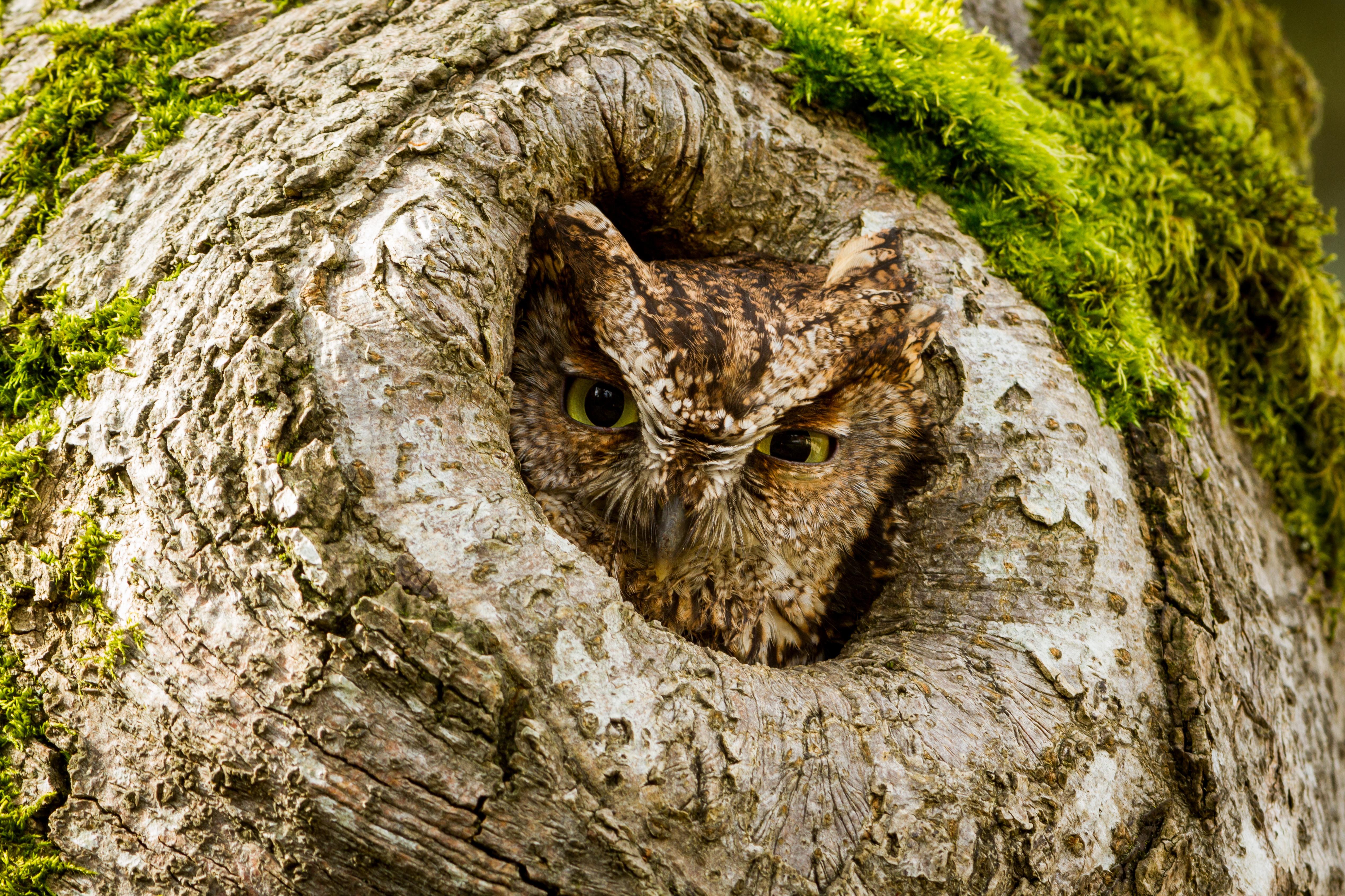 Сова на дереве скачать
