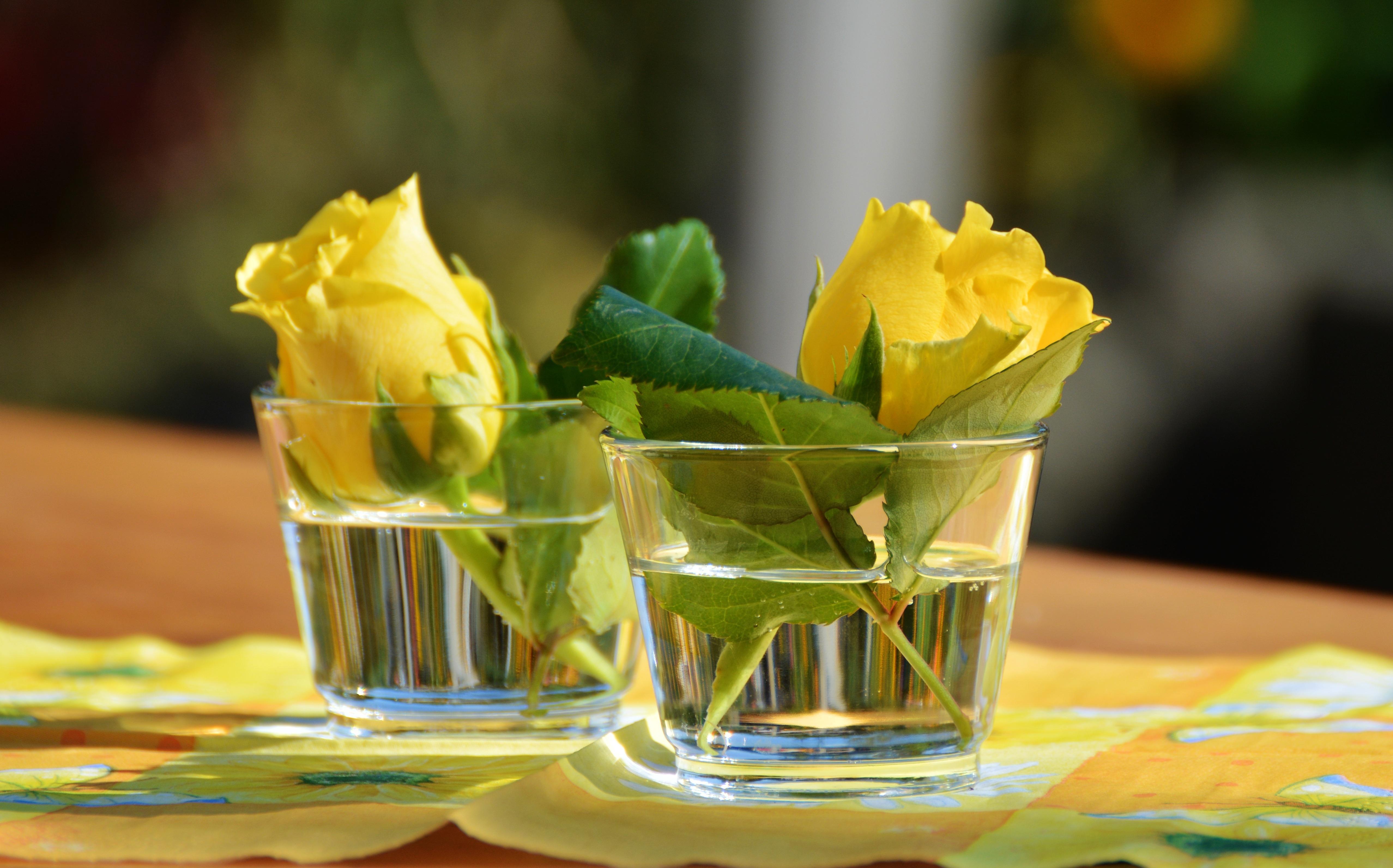 Фото цветов в стакане