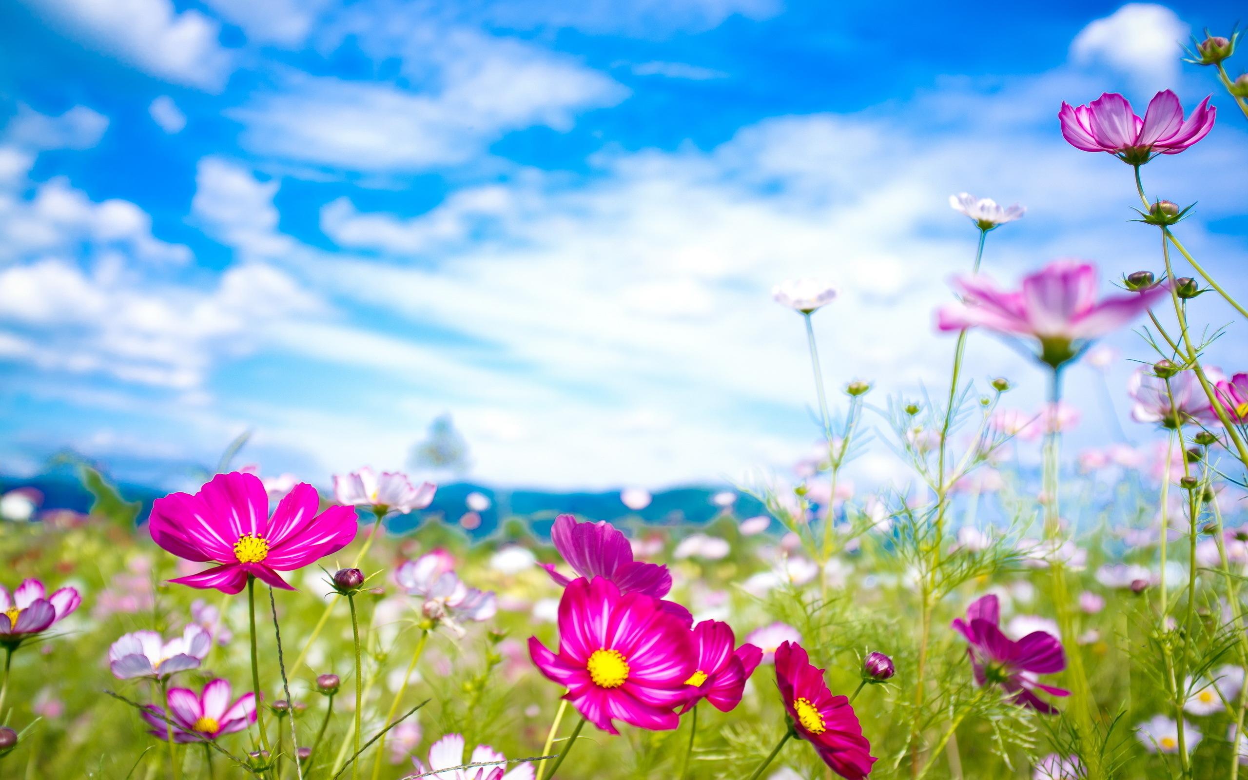 этой обои на рабочий стол лето вода природа цветы всем этим