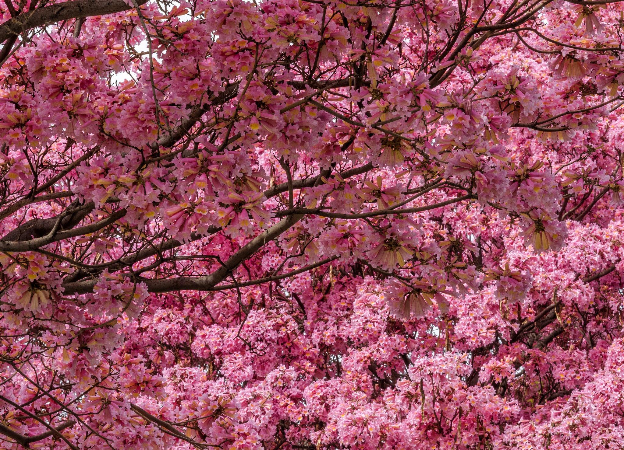 Открытки спасибо, картинки цветущие сады сакура
