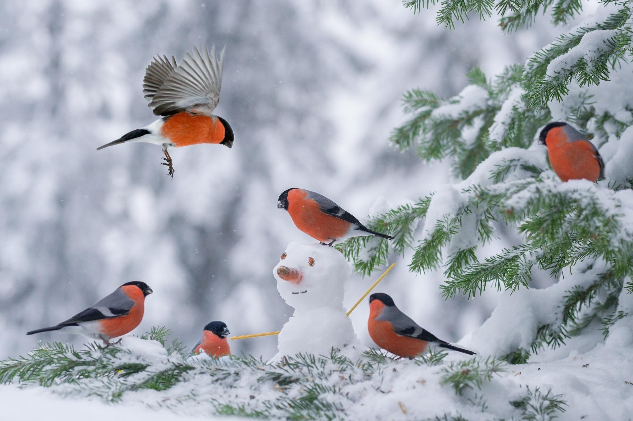 Картинки для одноклассников птицы