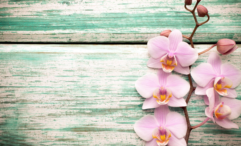 наконец-то картинки с высоким разрешением вертикаль цветы мужчины