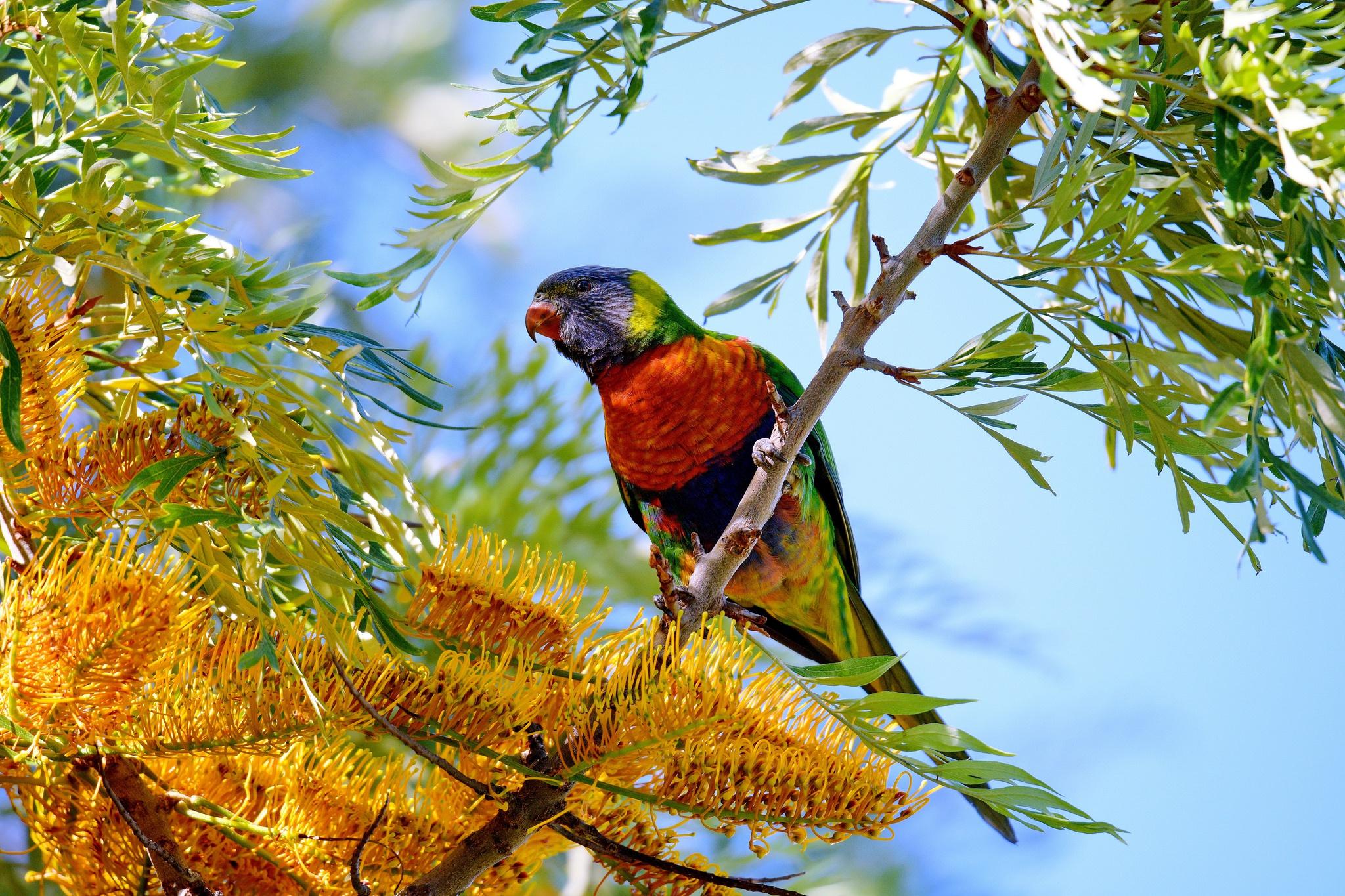 Картинка разные птицы на дереве