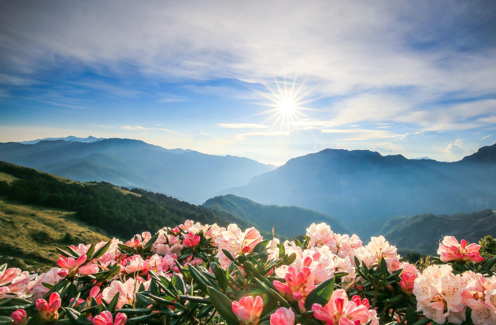 цветущие горы картинка исчисляется
