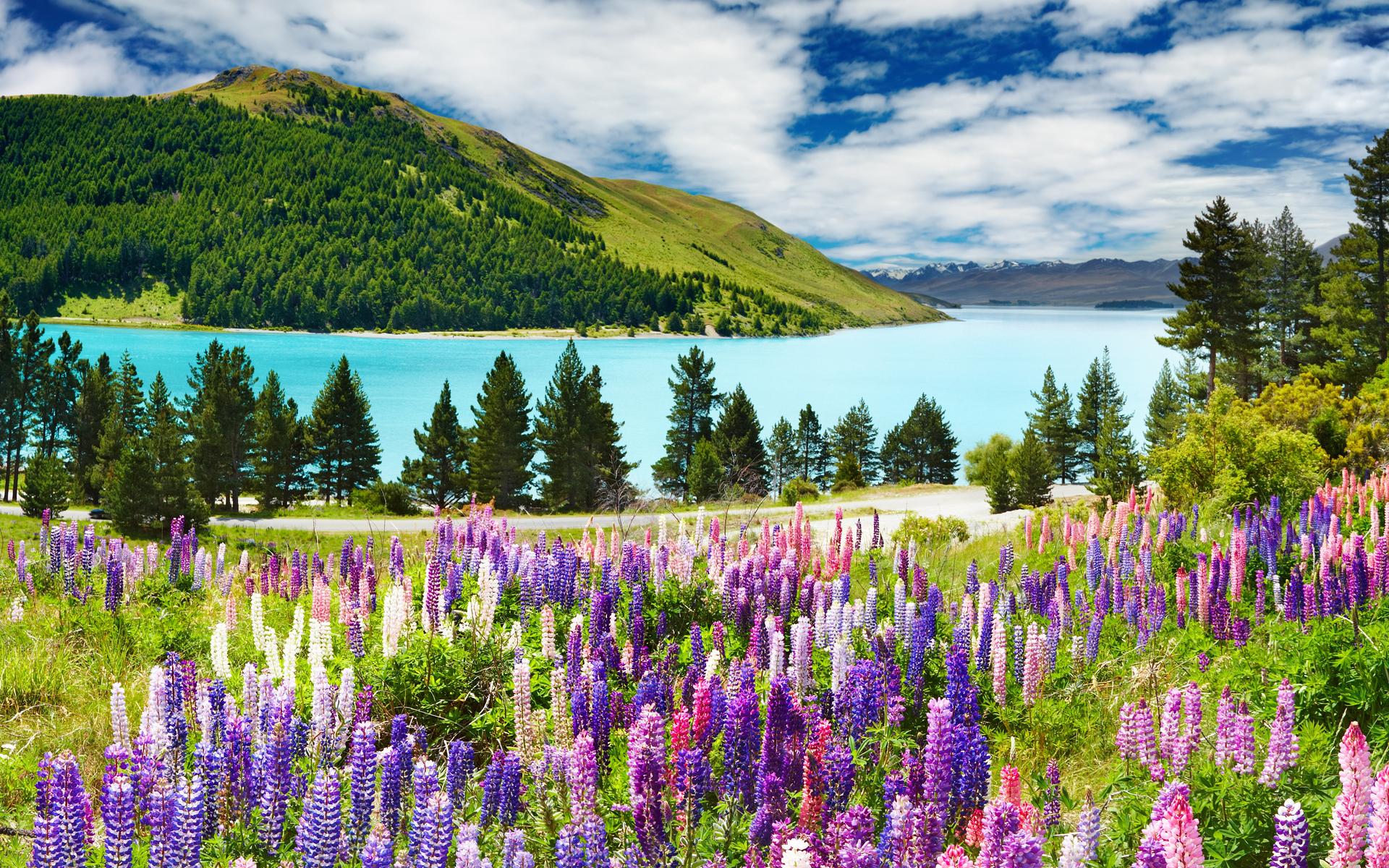 Фото лето горы цветы