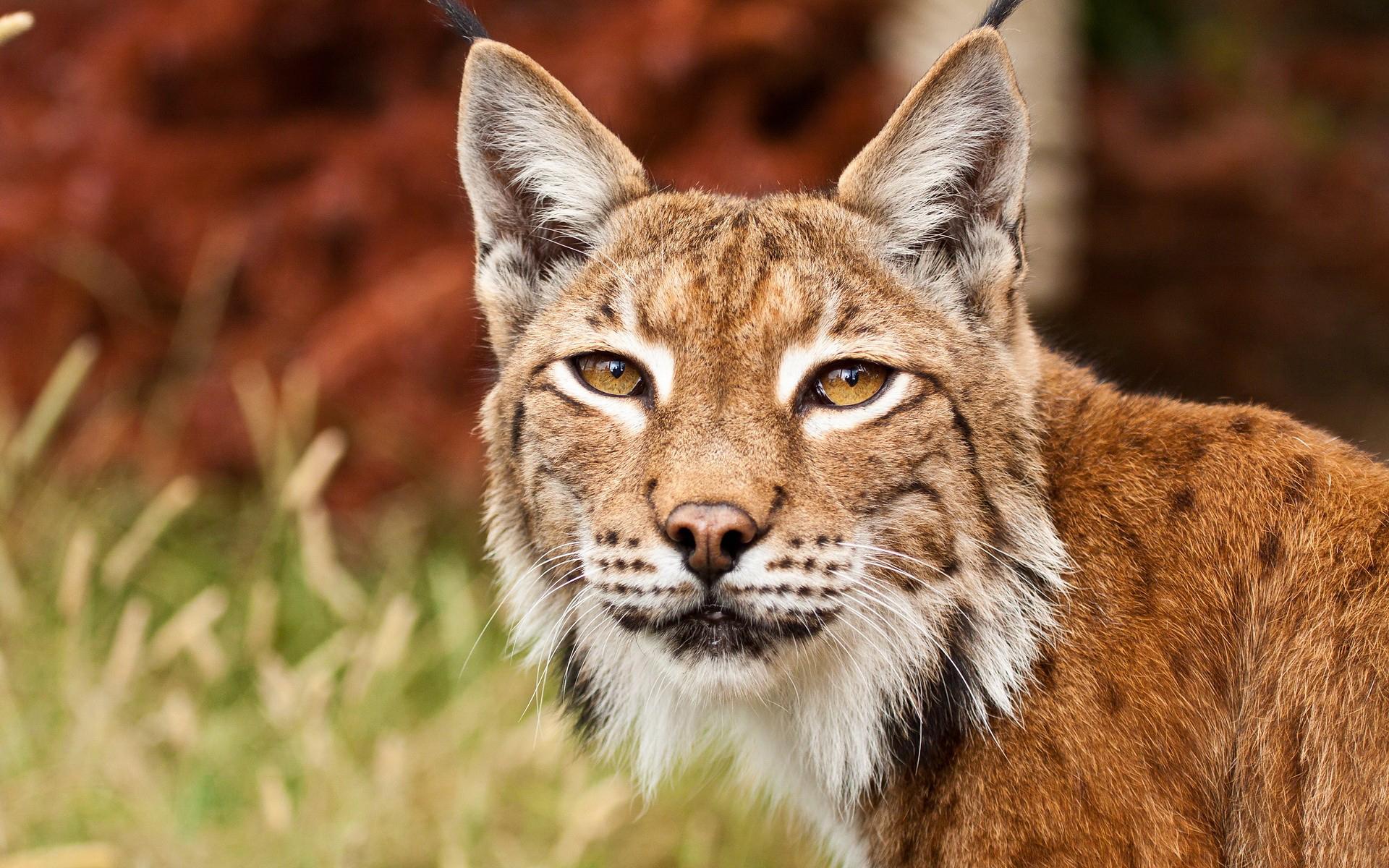 красивые картинки с дикими хищными животными