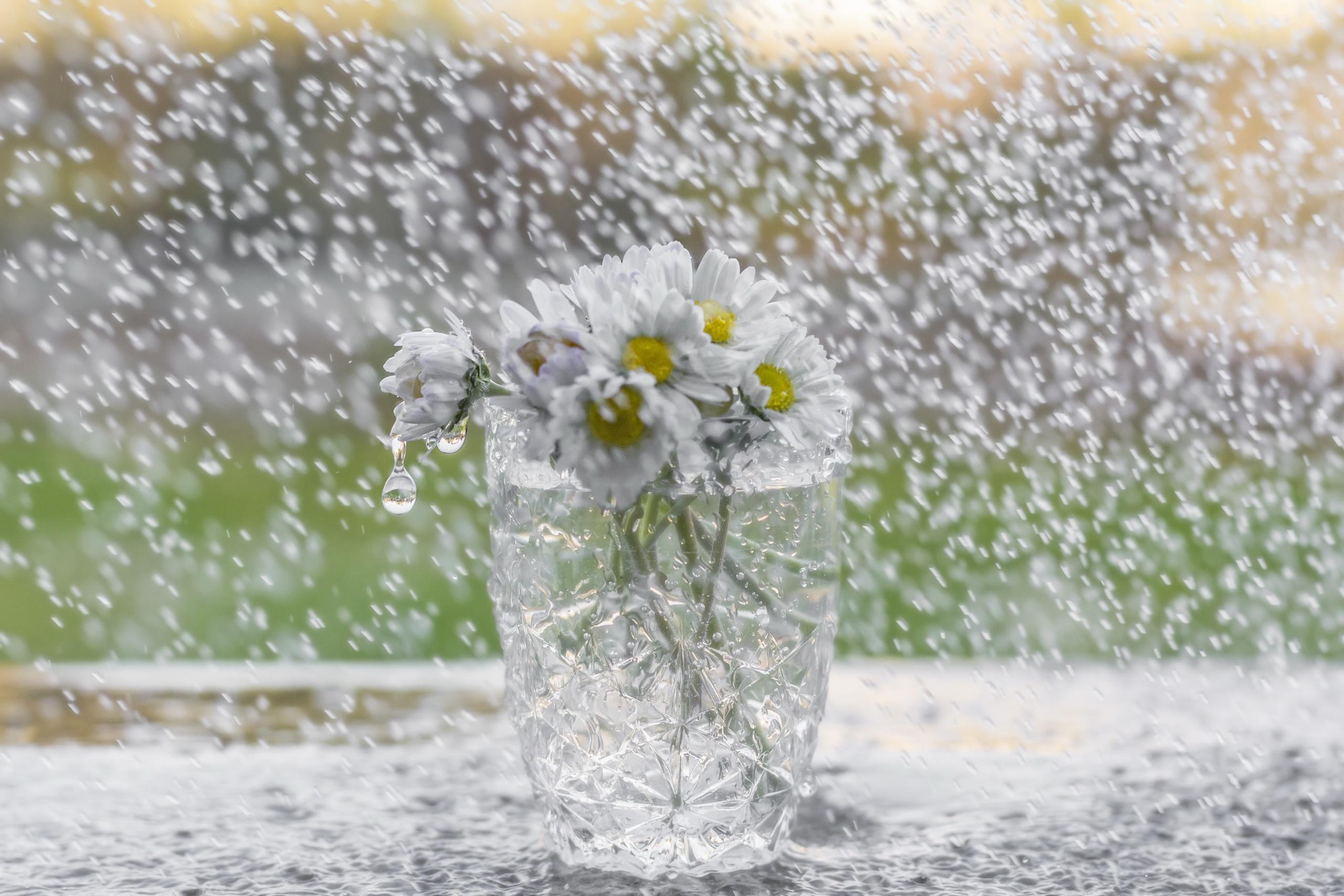 Открытки дождь и цветы, мартам женщинам картинки