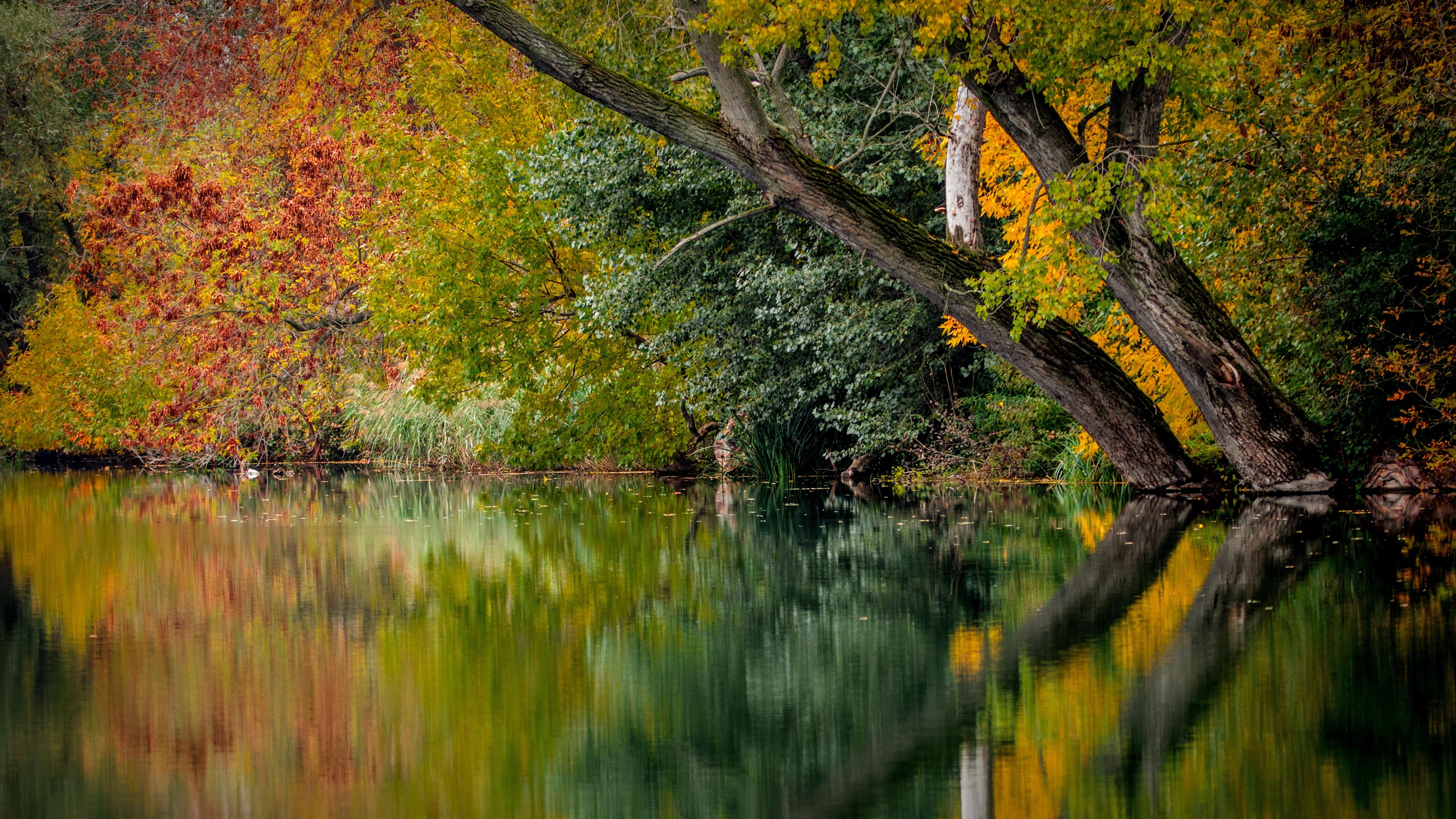 природа деревья река осень скачать