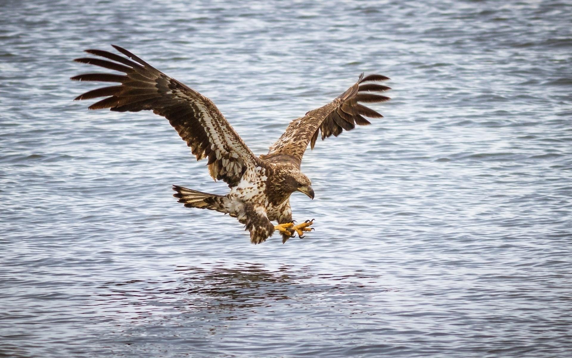 орел полет вода скачать