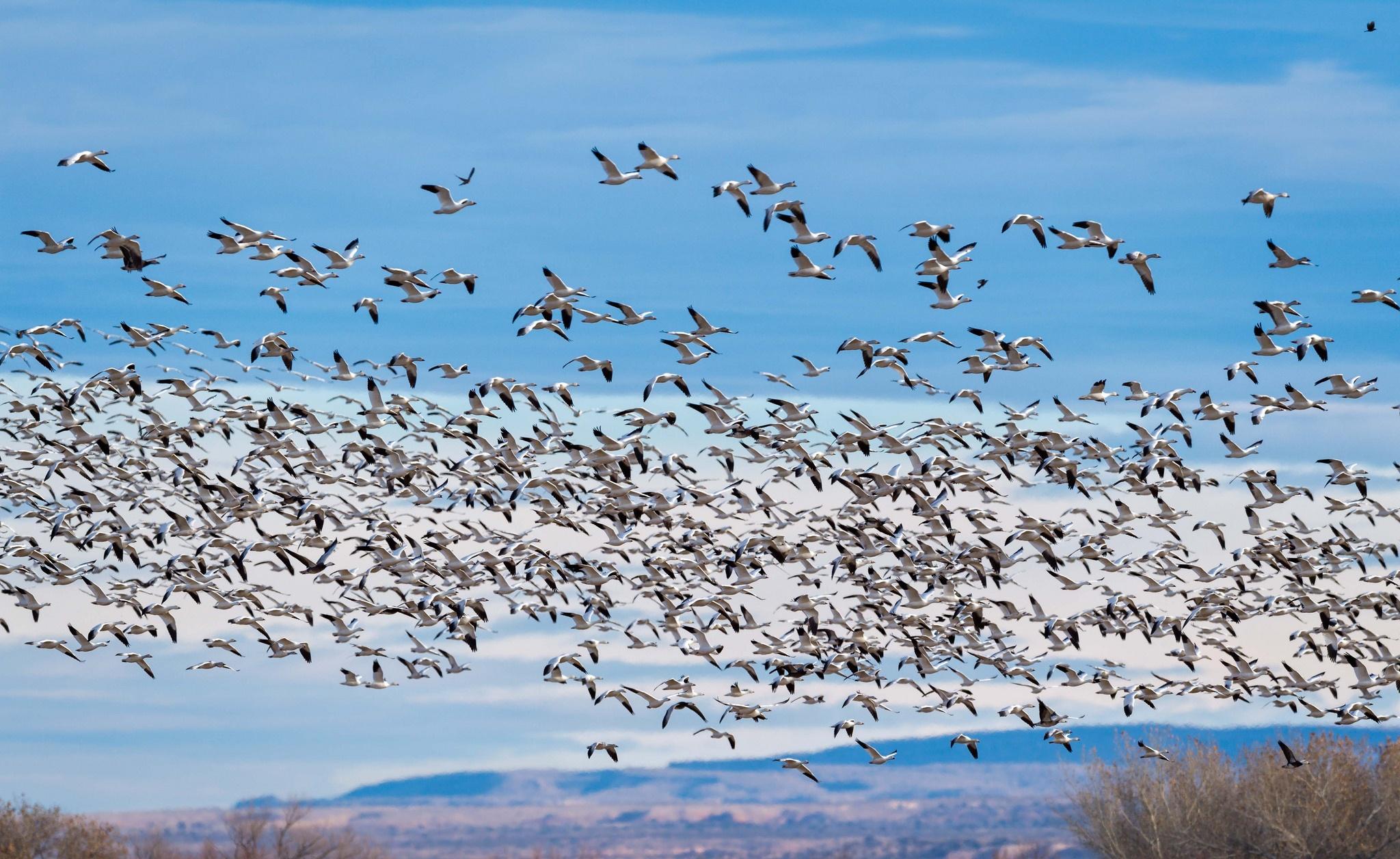это перелет птиц в картинках без