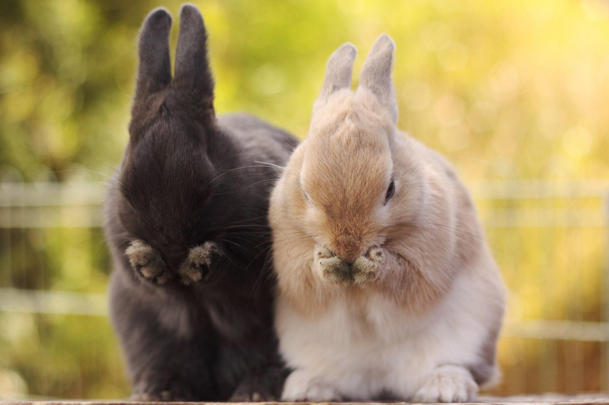 природа животное кролик  № 1593178 бесплатно