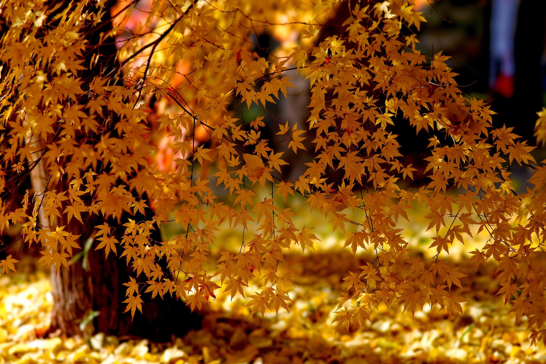 разное природа лампа цветы желтые осень  № 2634580  скачать