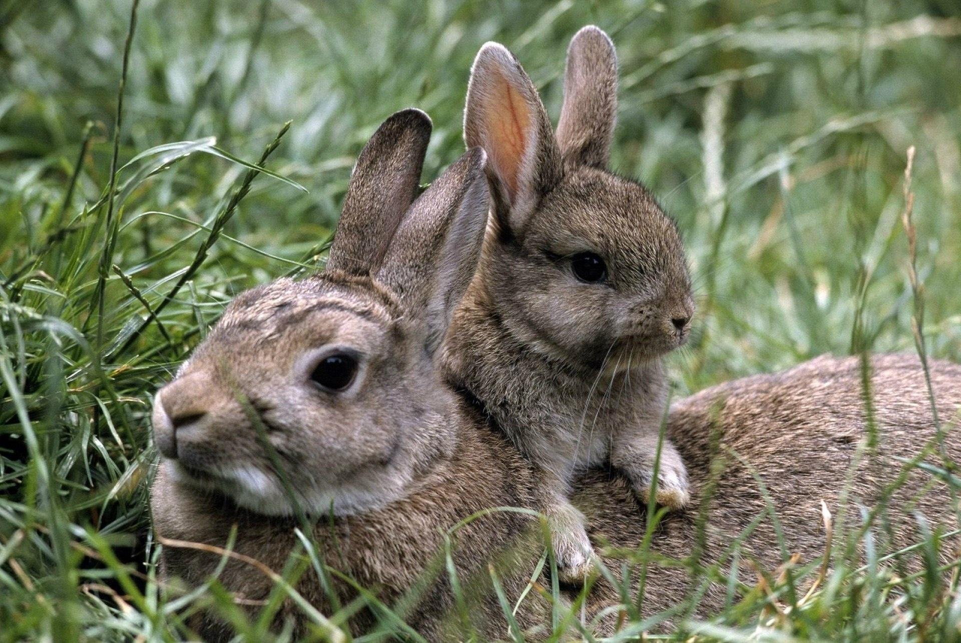 Картинки зайца маленького