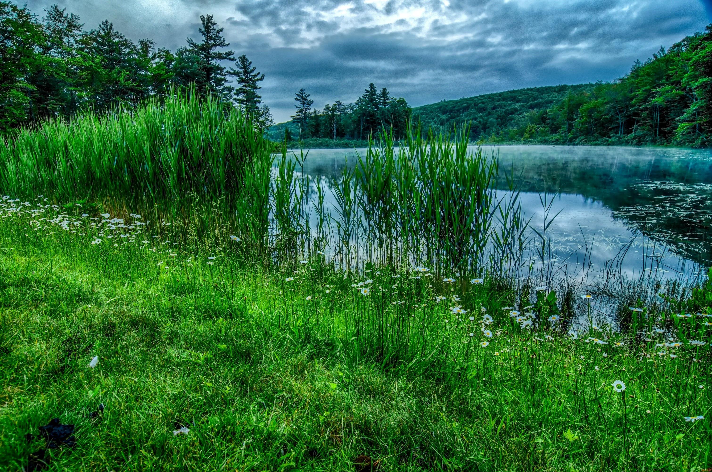 Берег озера в траве  № 2482592 без смс