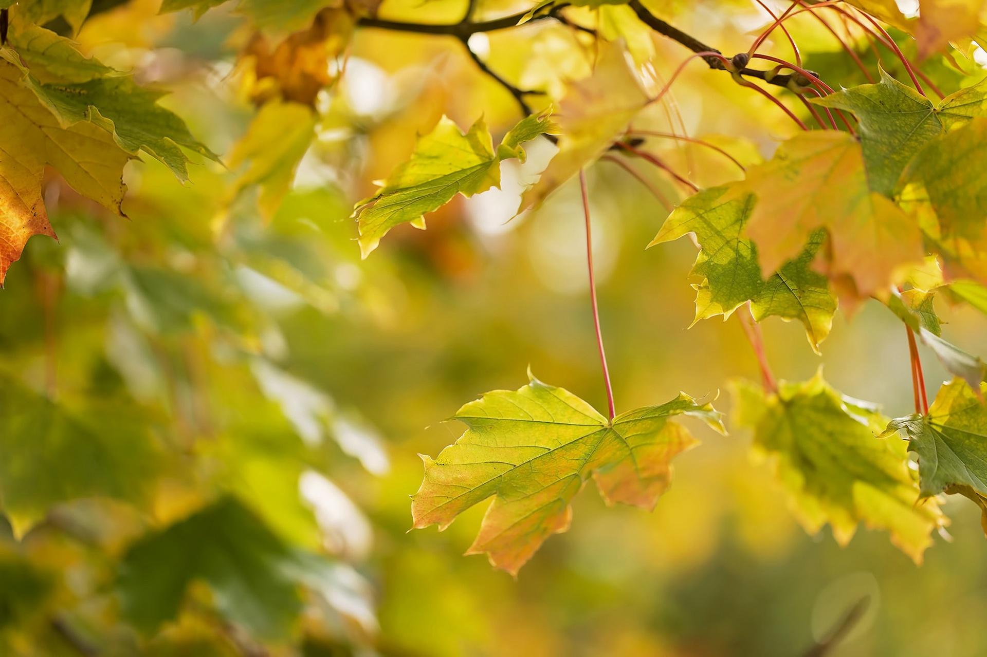 природа ветка листья nature branch leaves  № 2286  скачать