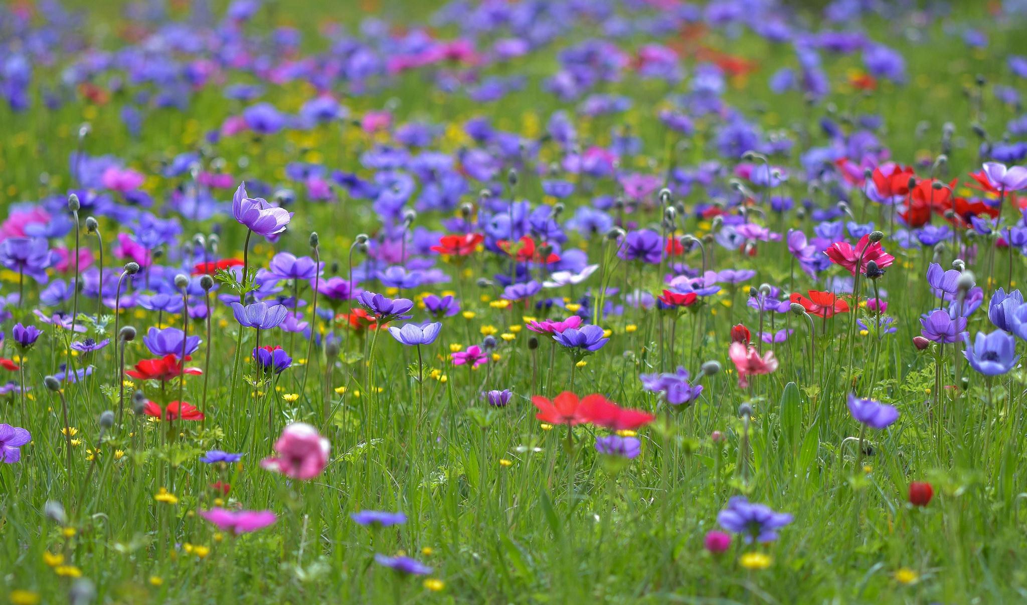Картинка лето поле цветы