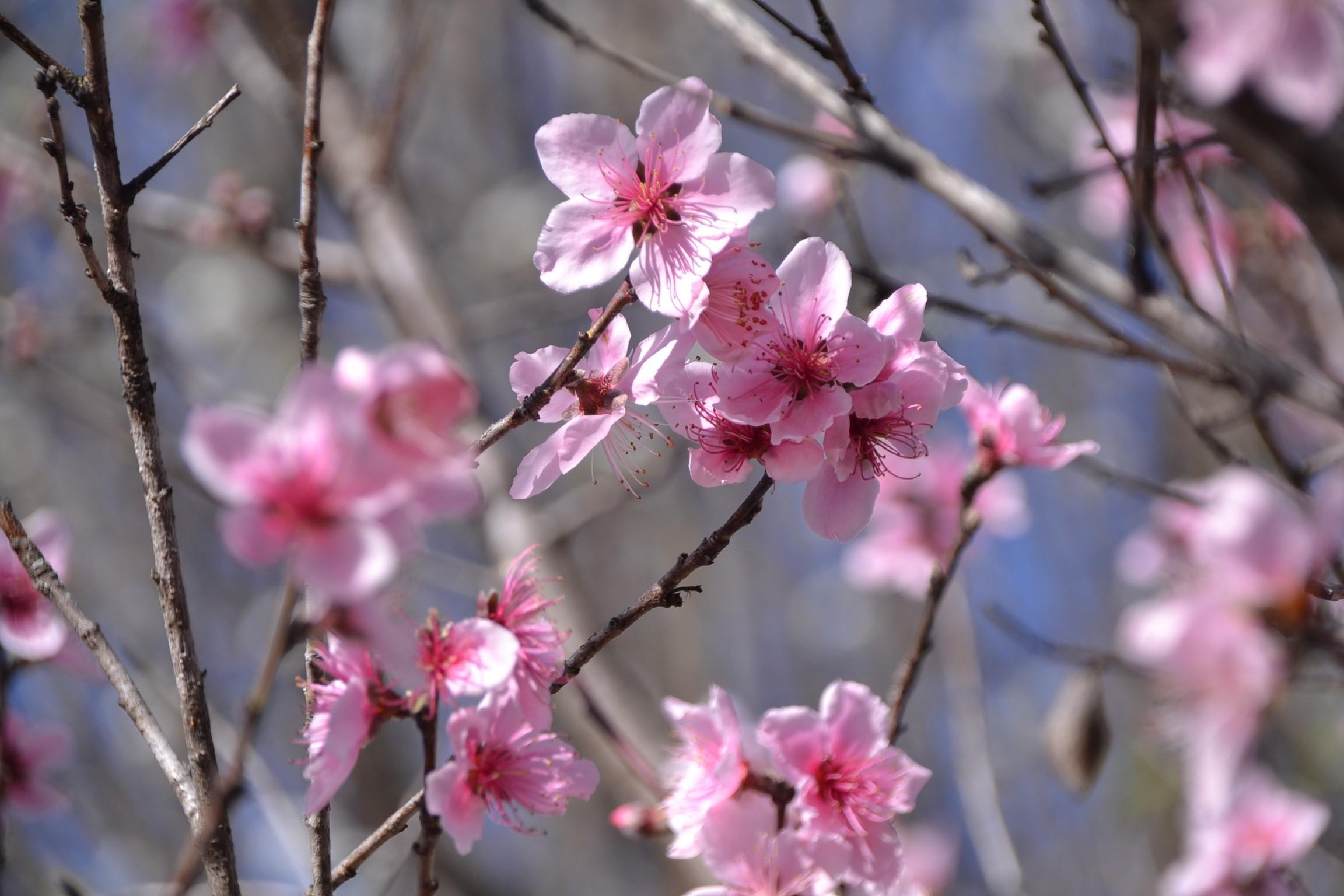 гифки красивые картинки цветение веточки кто додумается