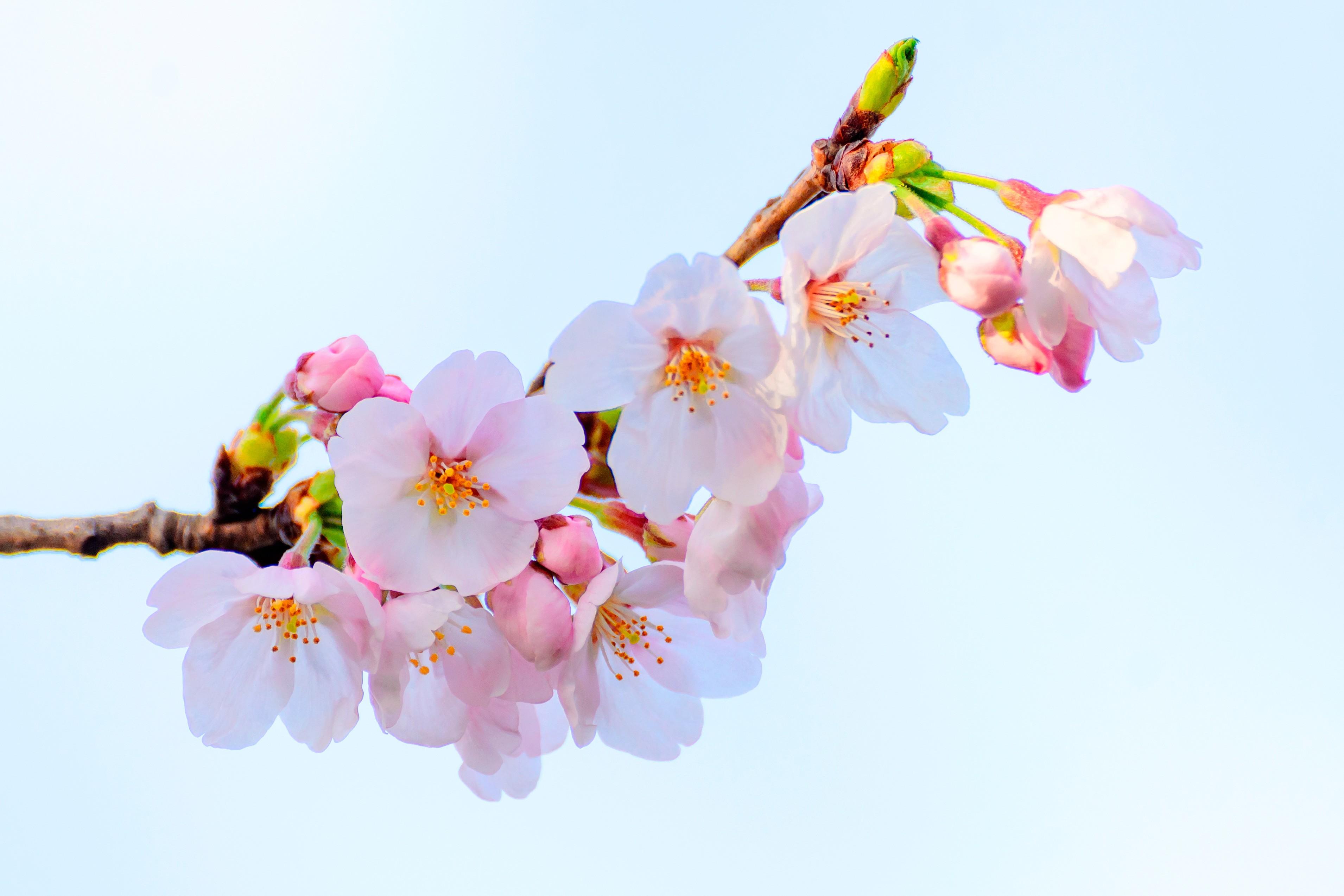 картинки весенних веточек и цветов этот