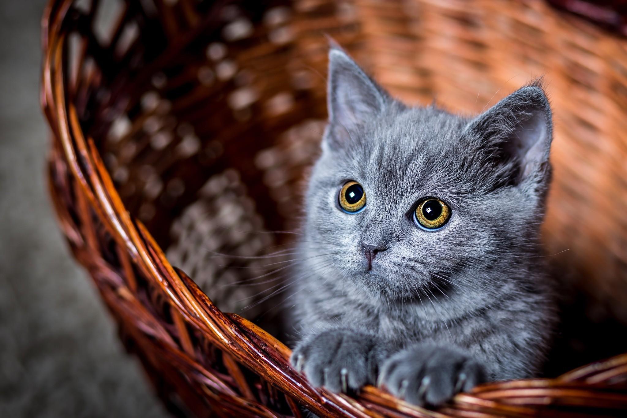 время, чтобы куда загрузить фото кошек чудесный новогодний