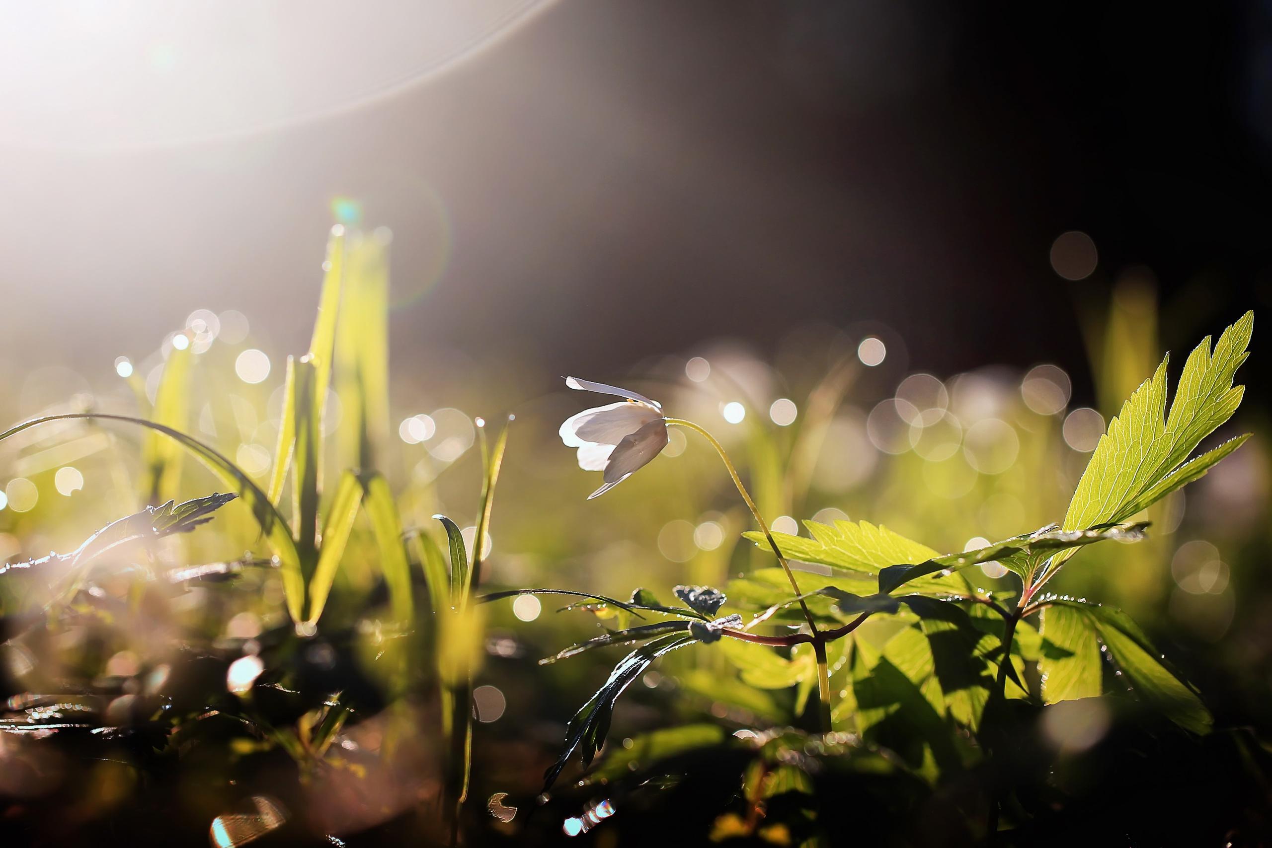 картинки солнечные весна макро несущей стене