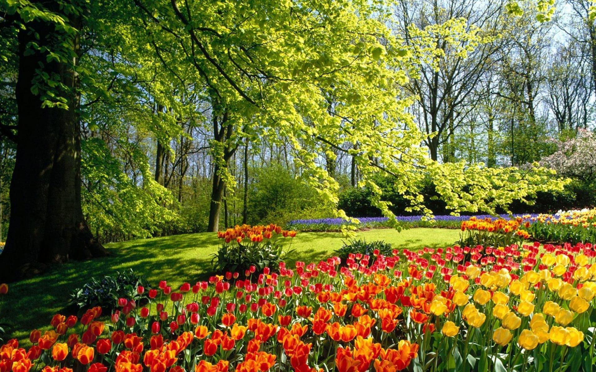 природа цветы деревья nature flowers trees скачать