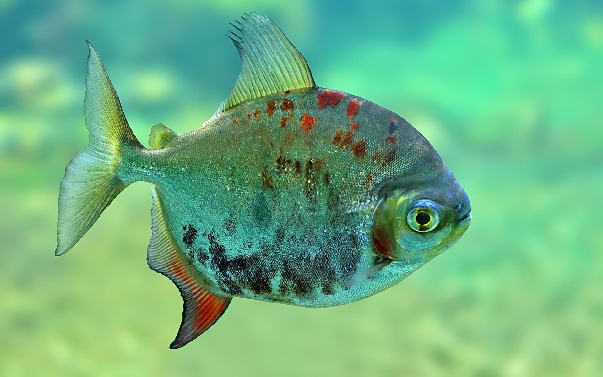 Рыбы картинки красивые, днем рождения