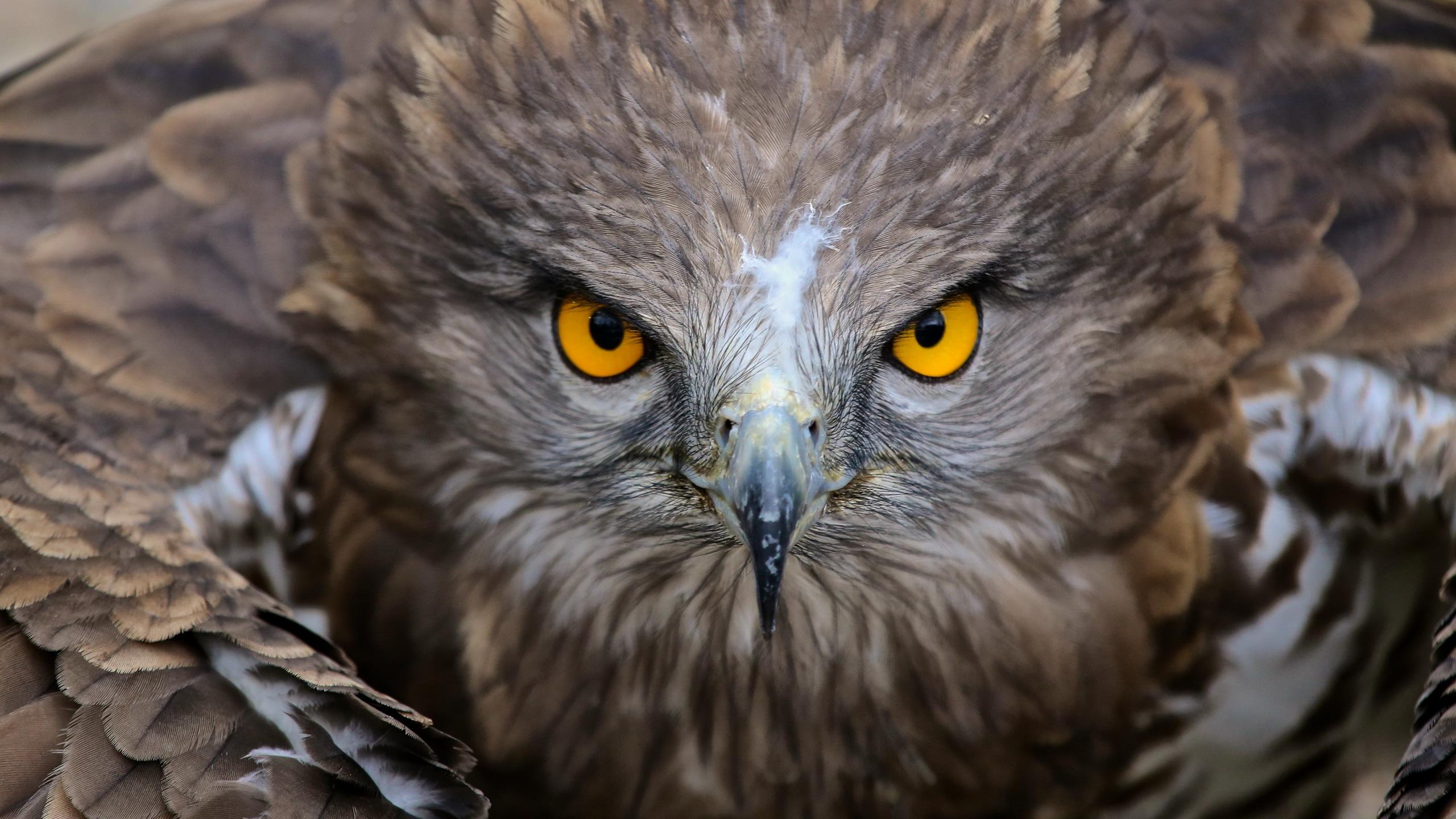 природа животные птица сокол nature animals bird Falcon бесплатно