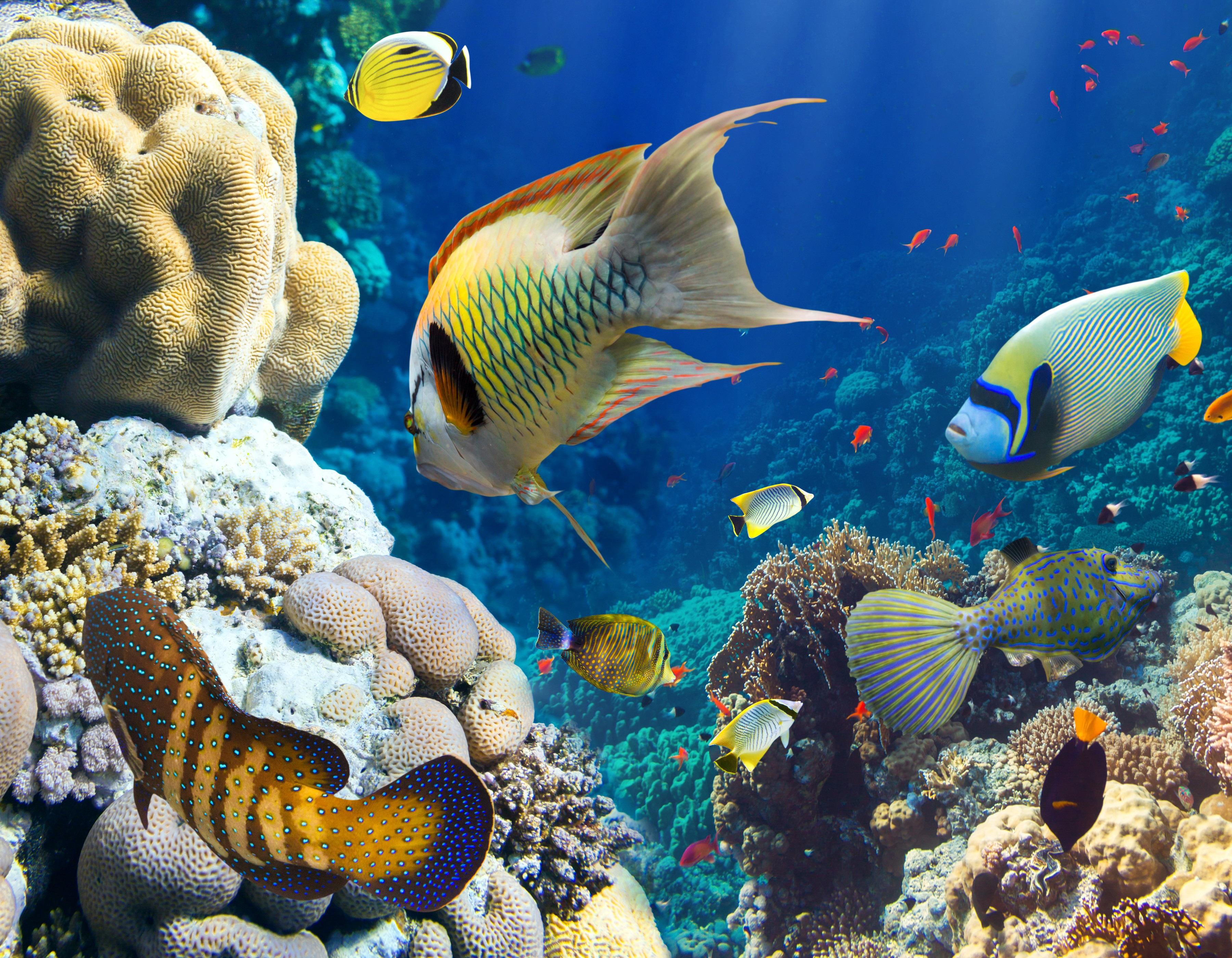 фото подводного мира другом