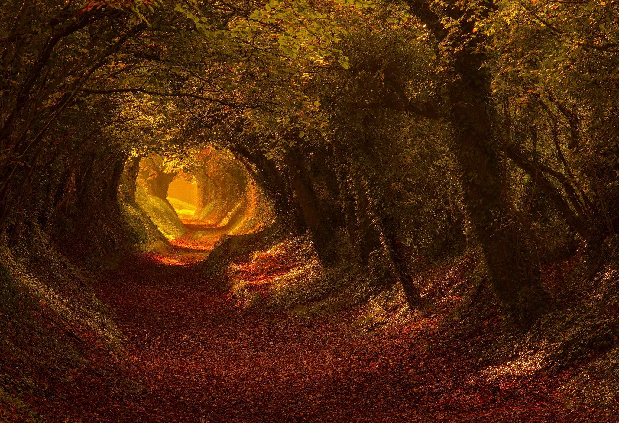 туннель из деревьев скачать