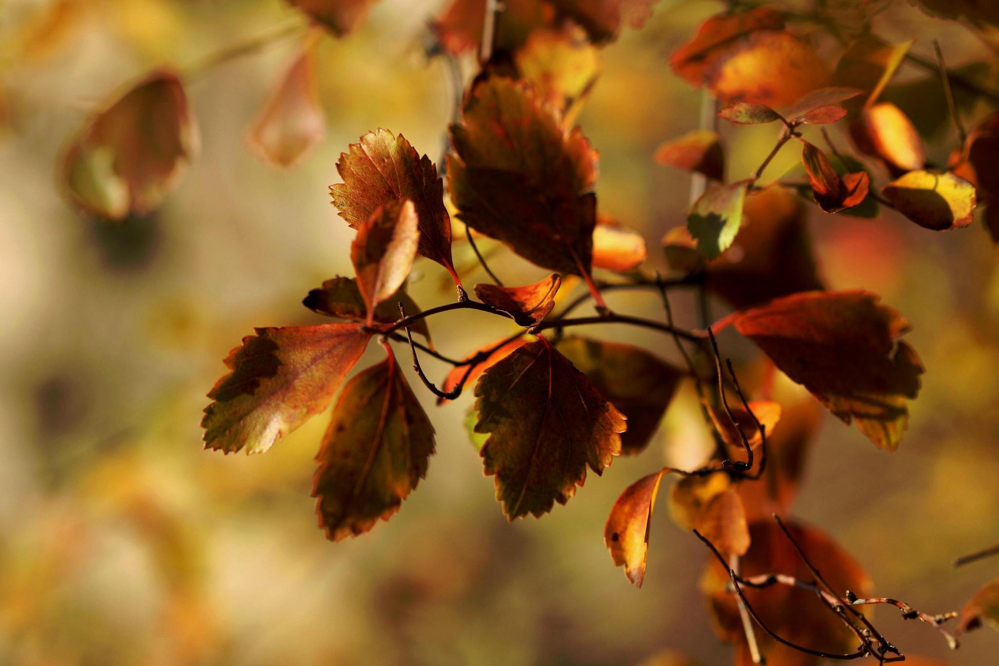 листья ветка забор палки бесплатно