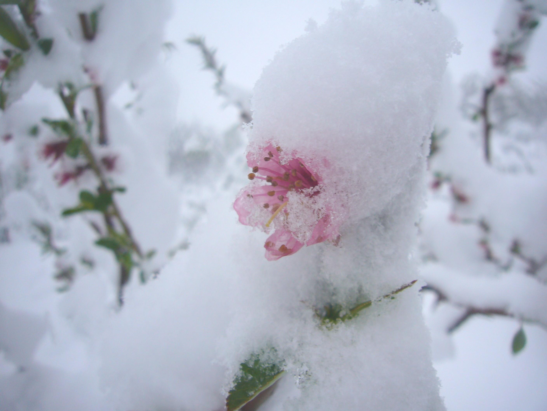 Цветы на снегу картинки с подписями