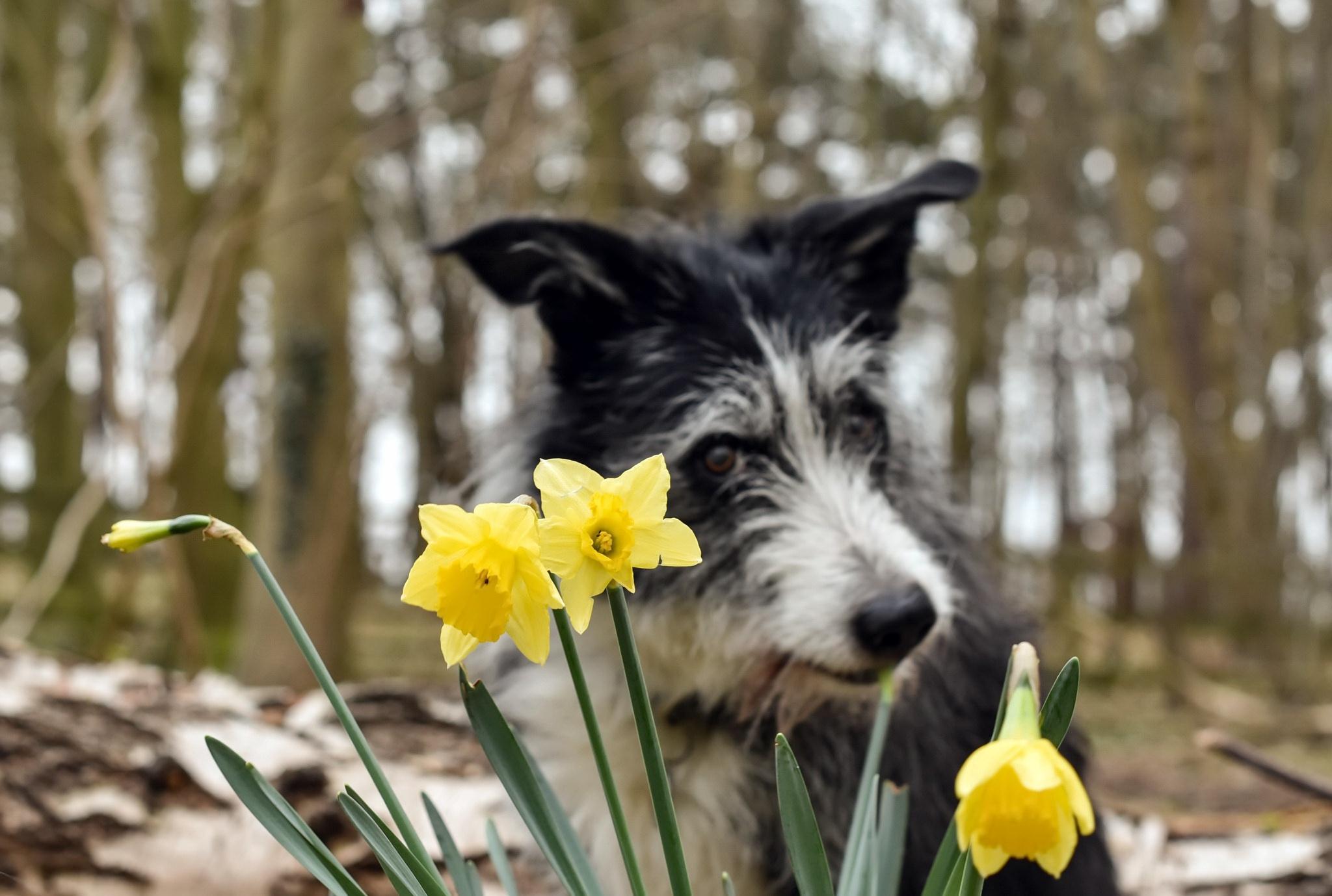 весна картинки с собаками выход нетребко