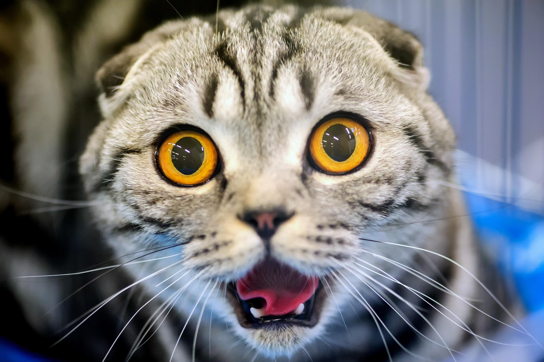 Кот взгляд испуганный  № 650698 без смс