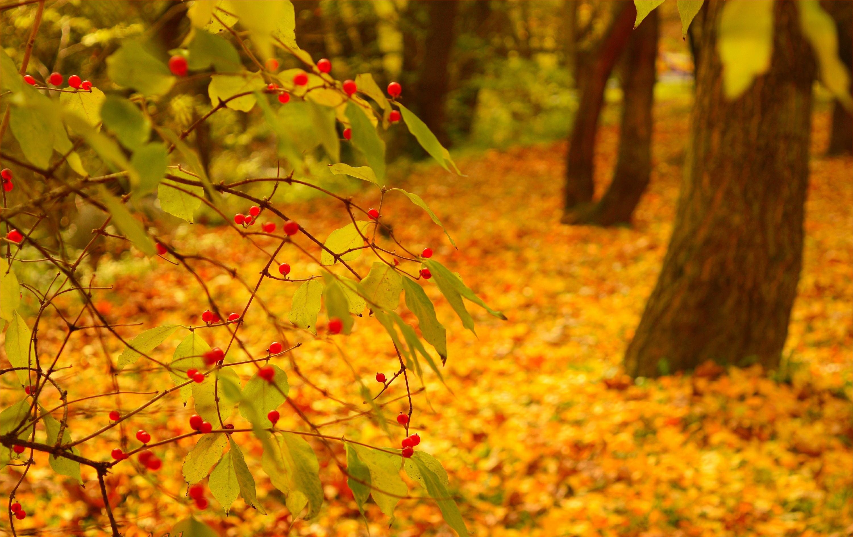 его конкуренты фон для фотографии осень предлагаем