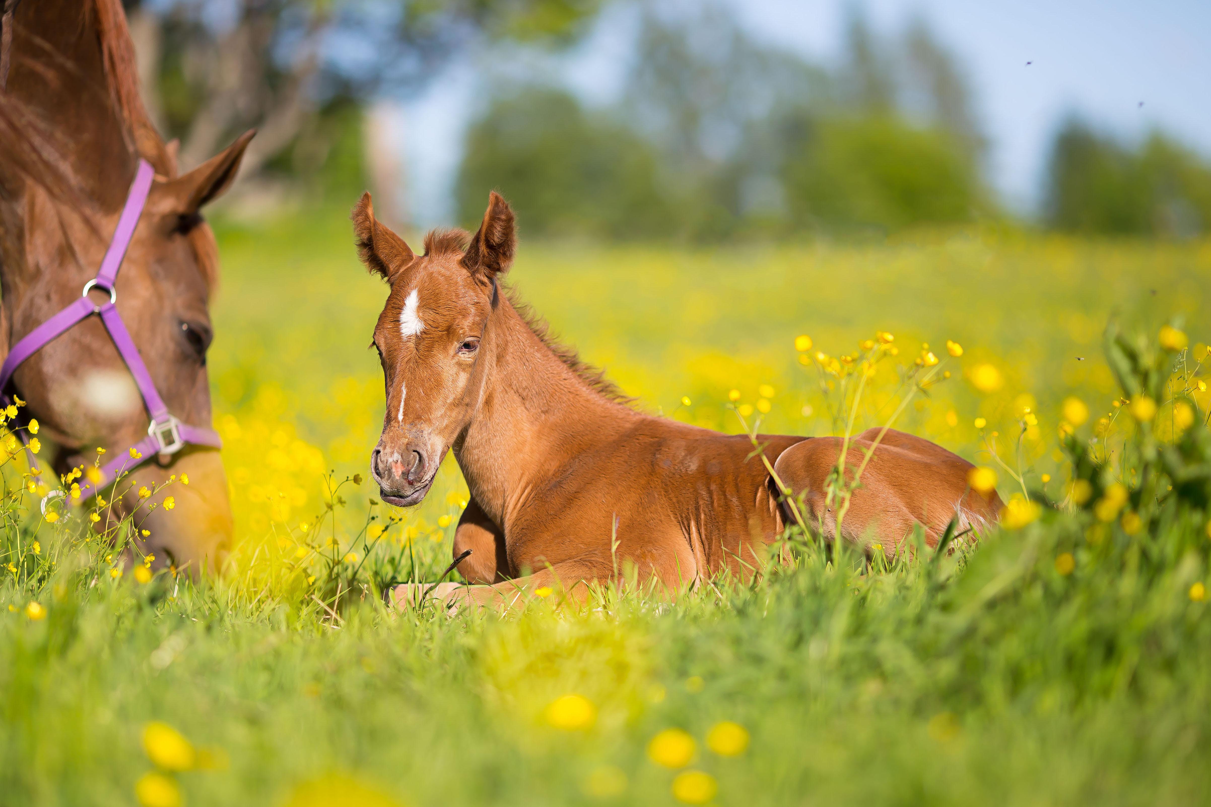 Лошадь в цветах  № 3117275  скачать
