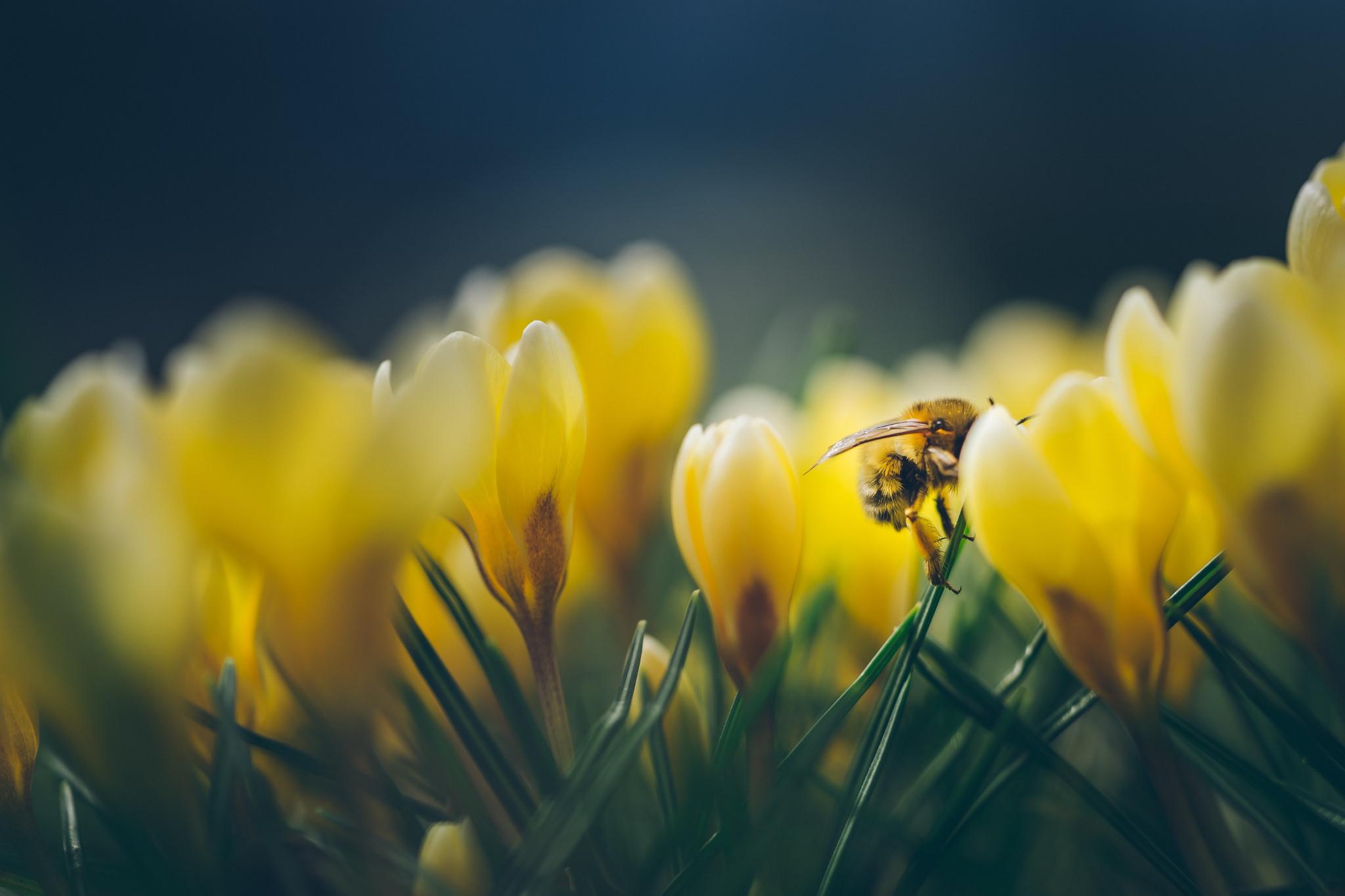 картинки солнечные весна макро путем