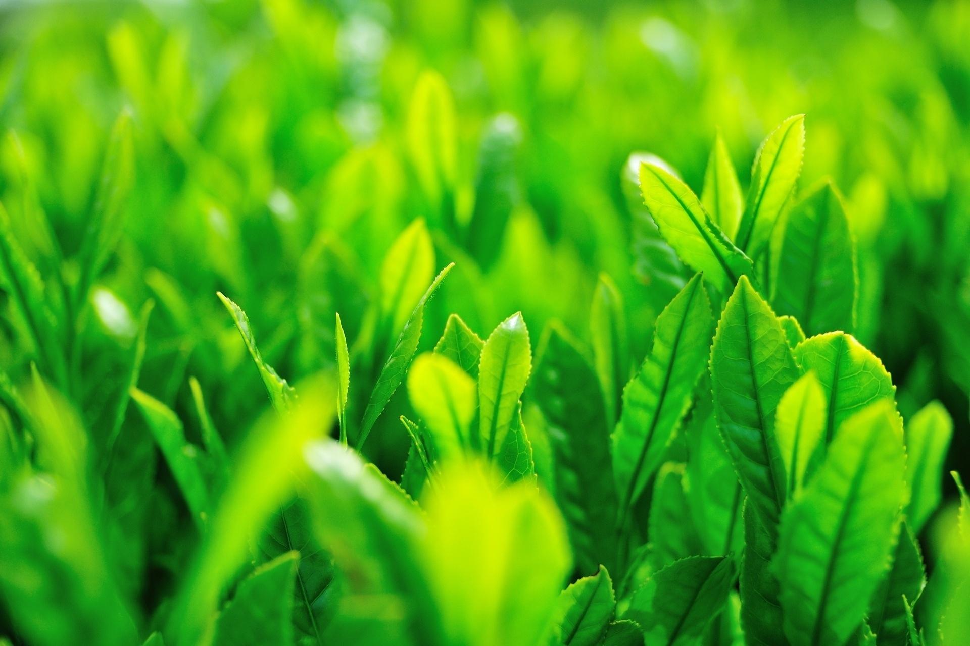 зеленые стебельки без смс