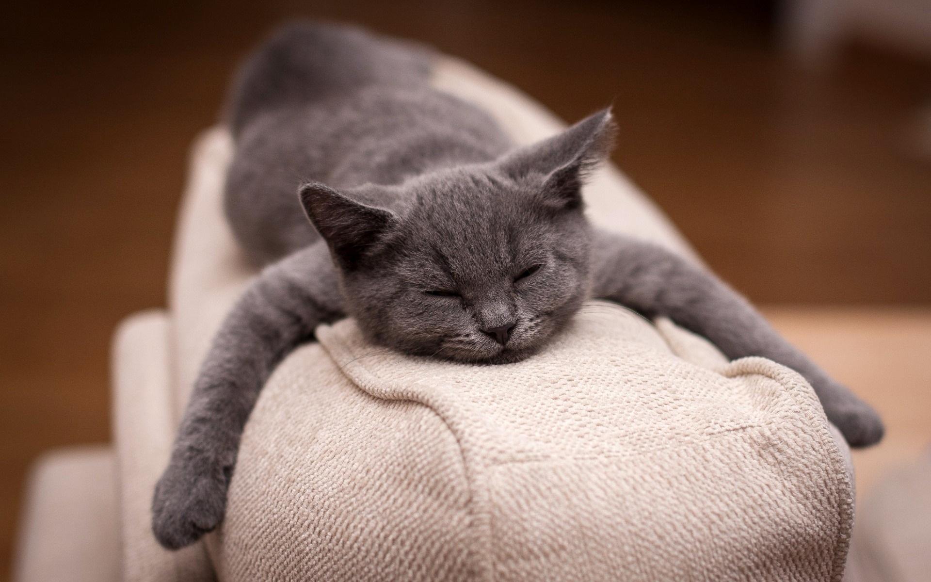 Картинки приколы кот спит